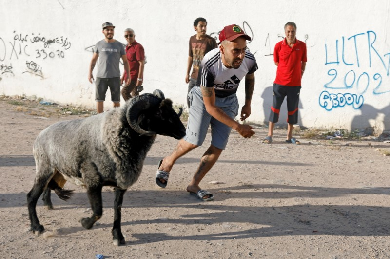 Mourad is seen next to his ram 2Pac during a ram fighting in Bab Souika district, near the Old City of Tunis, Tunisia June 13, 2021. Picture taken June 13, 2021. REUTERS/Zoubeir Souissi