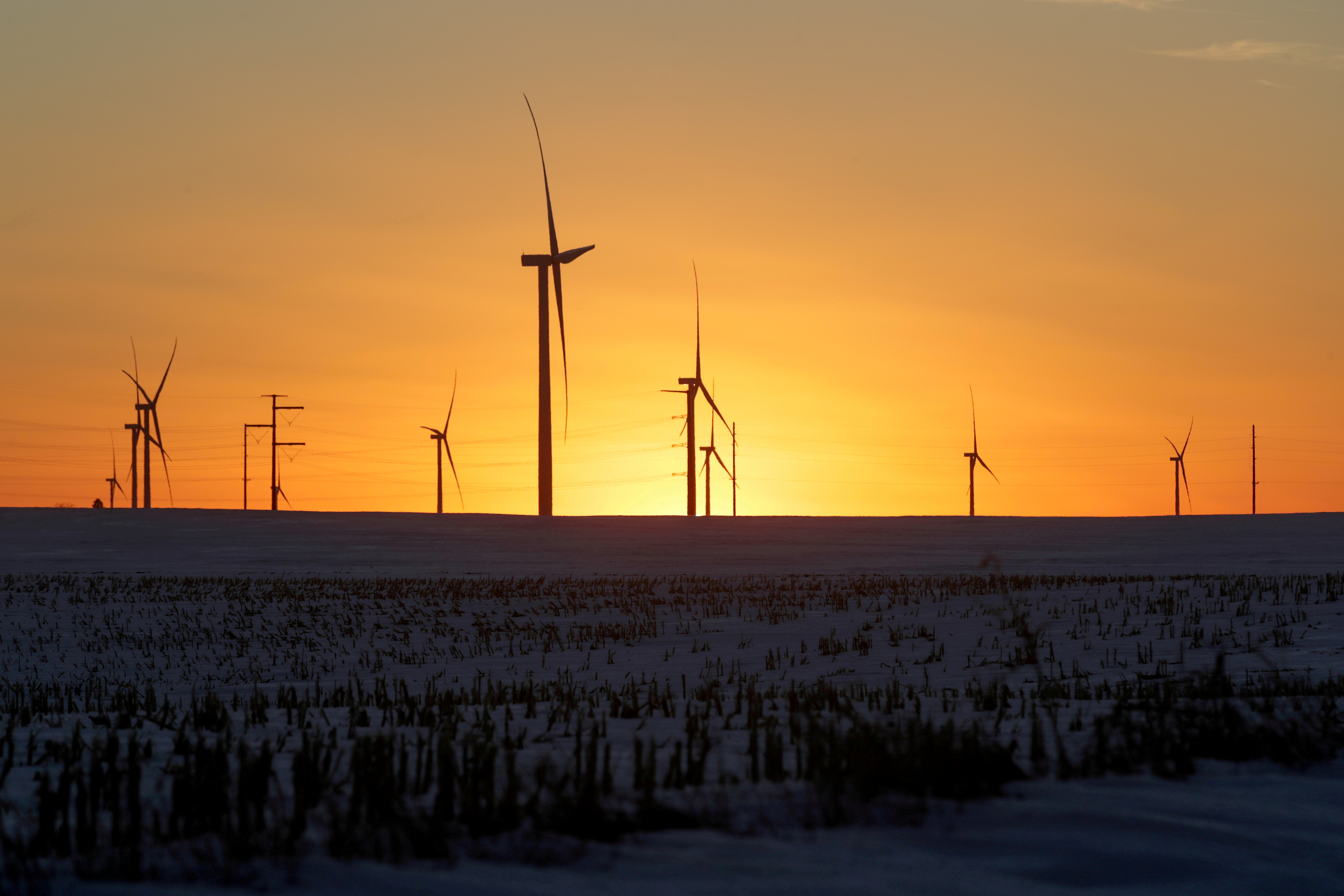A wind farm shares space with corn fields the day before the Iowa caucuses, where agriculture and clean energy are key issues, in Latimer, Iowa, U.S. February 2, 2020. REUTERS/Jonathan Ernst/File Photo