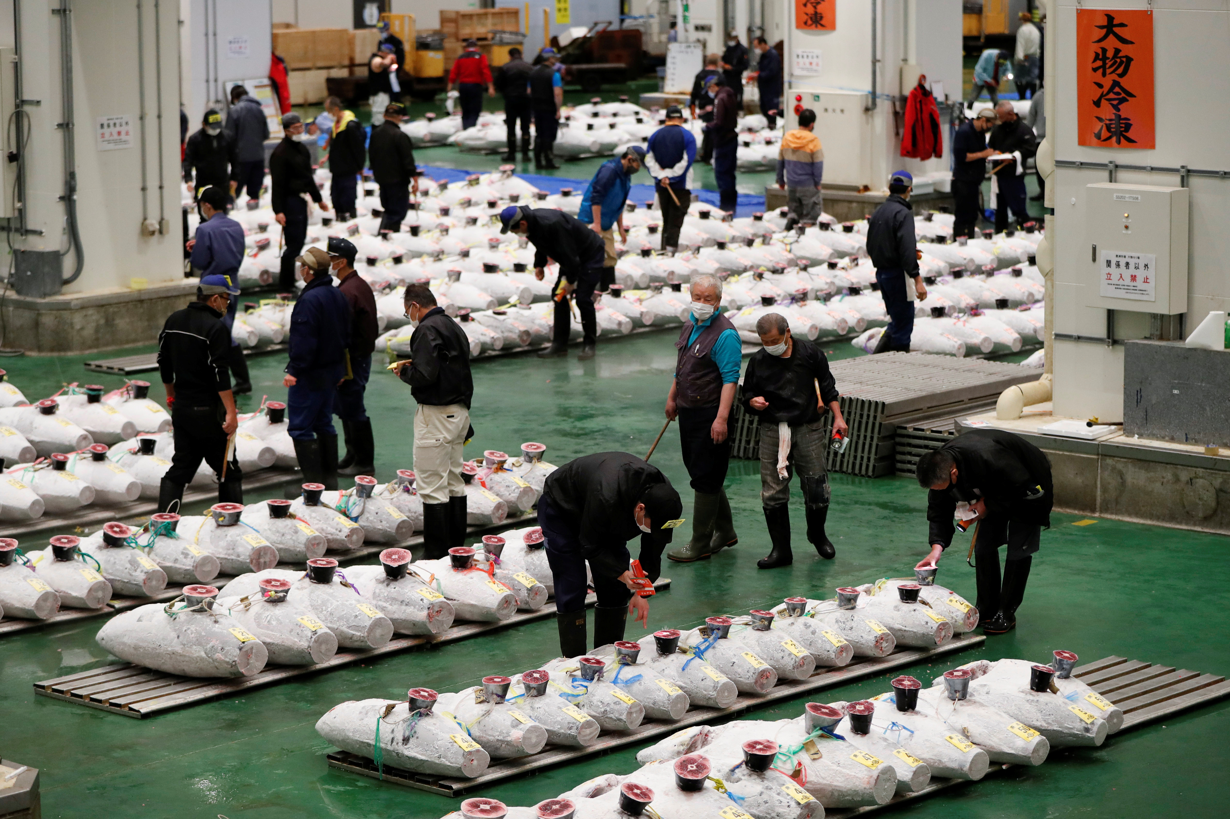 Wholesalers check the quality of frozen tuna displayed during the tuna auctions, amid the coronavirus disease (COVID-19) outbreak, at Toyosu fish market in Tokyo, Japan  August 25, 2020. Picture taken August 25, 2020.  REUTERS/Issei Kato
