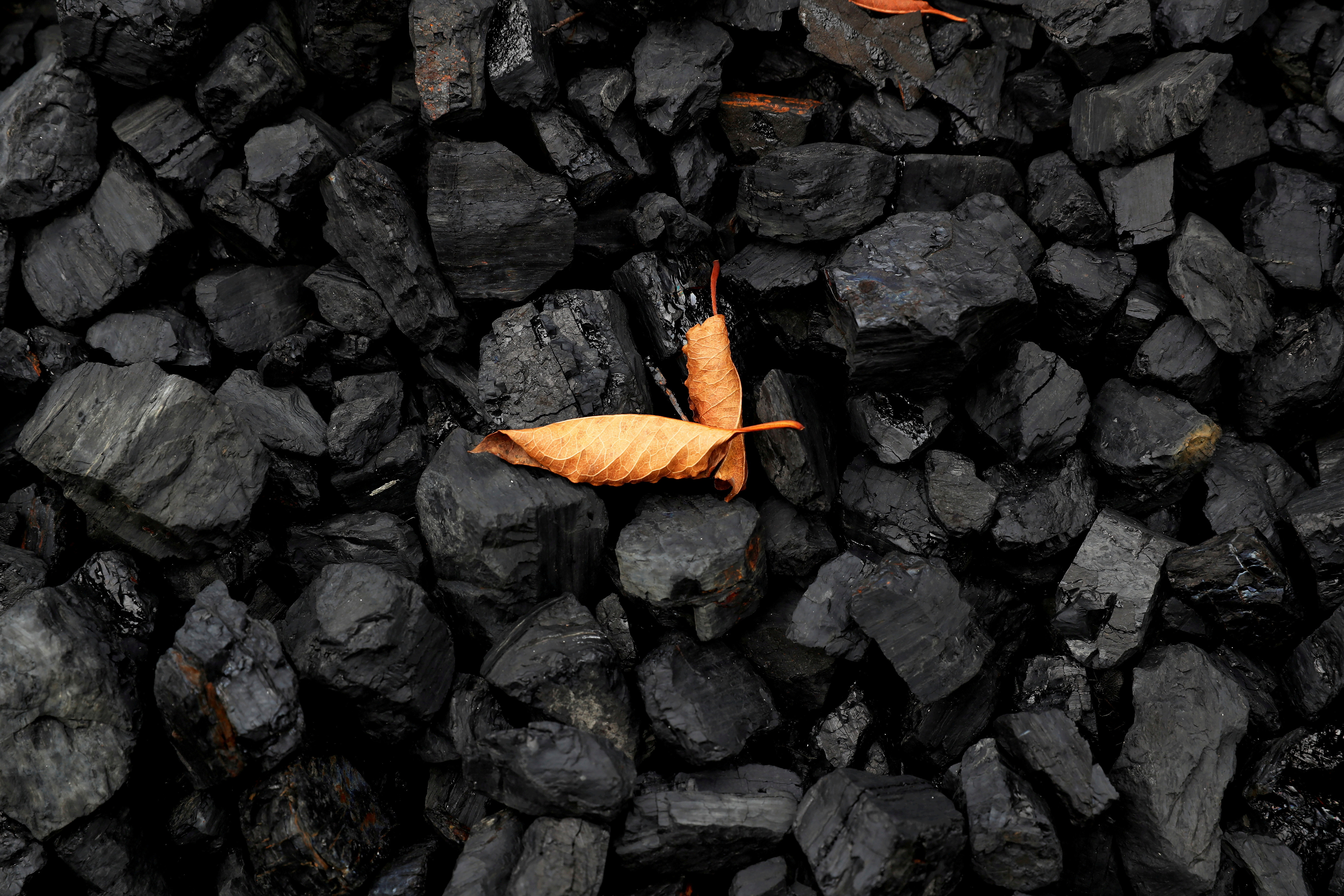 A leaf sits on top of a pile of coal in Youngstown, Ohio, U.S., September 30, 2020. REUTERS/Shannon Stapleton