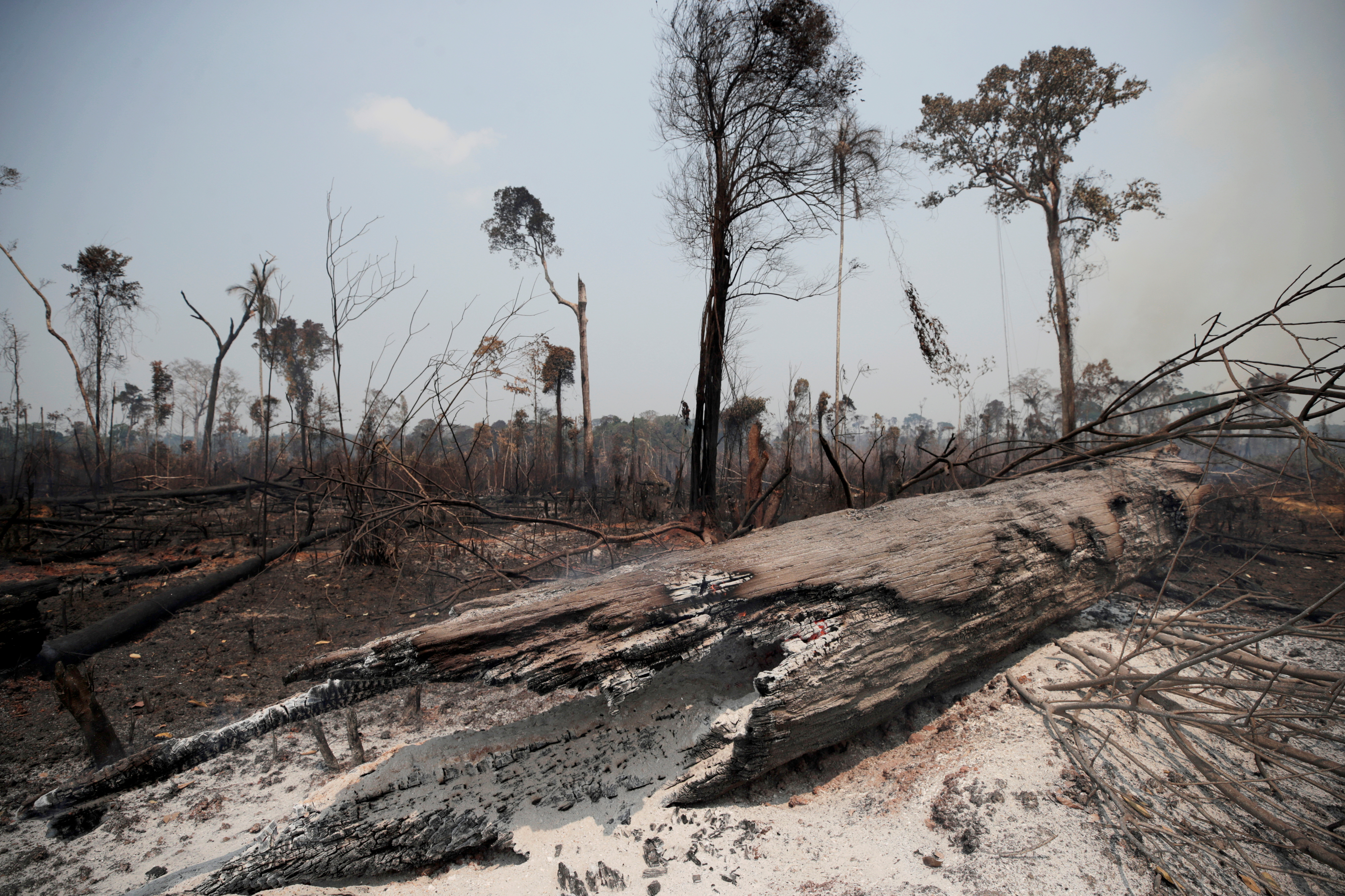 Charred trunks are seen on a tract of Amazon jungle, that was recently burned by loggers and farmers, in Porto Velho, Brazil August 23, 2019. REUTERS/Ueslei Marcelino