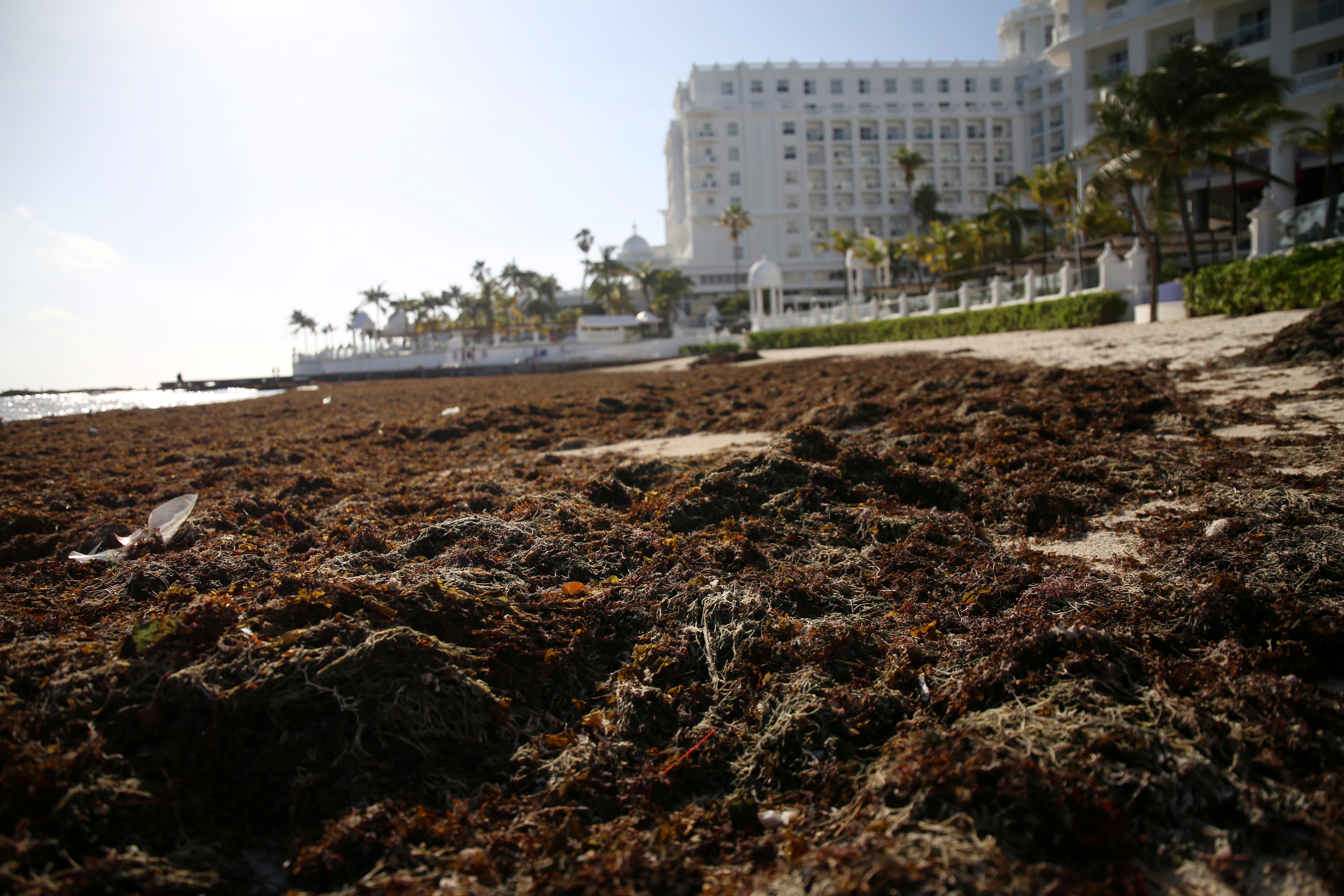A beach covered with sargassum is pictured near a hotel in Cancun, Mexico August 21, 2021. Picture taken August 21, 2021. REUTERS/Paola Chiomante