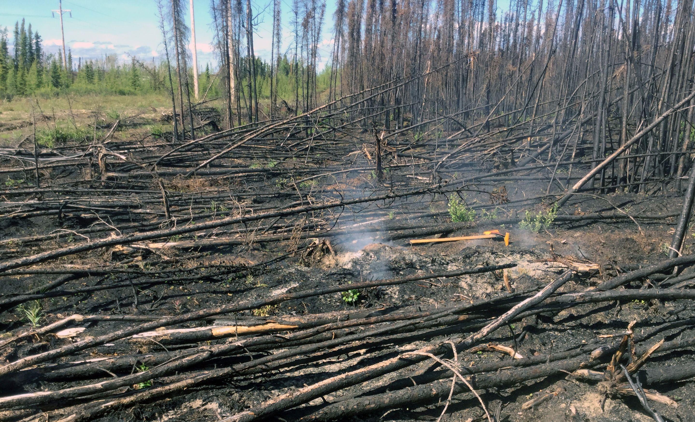 Smoke rises from a hot spot in the Swan Lake Fire scar at the Kenai National Wildlife Refuge, Alaska, U.S., June 16, 2020. Photo by Dan White/AlaskaHandout via REUTERS