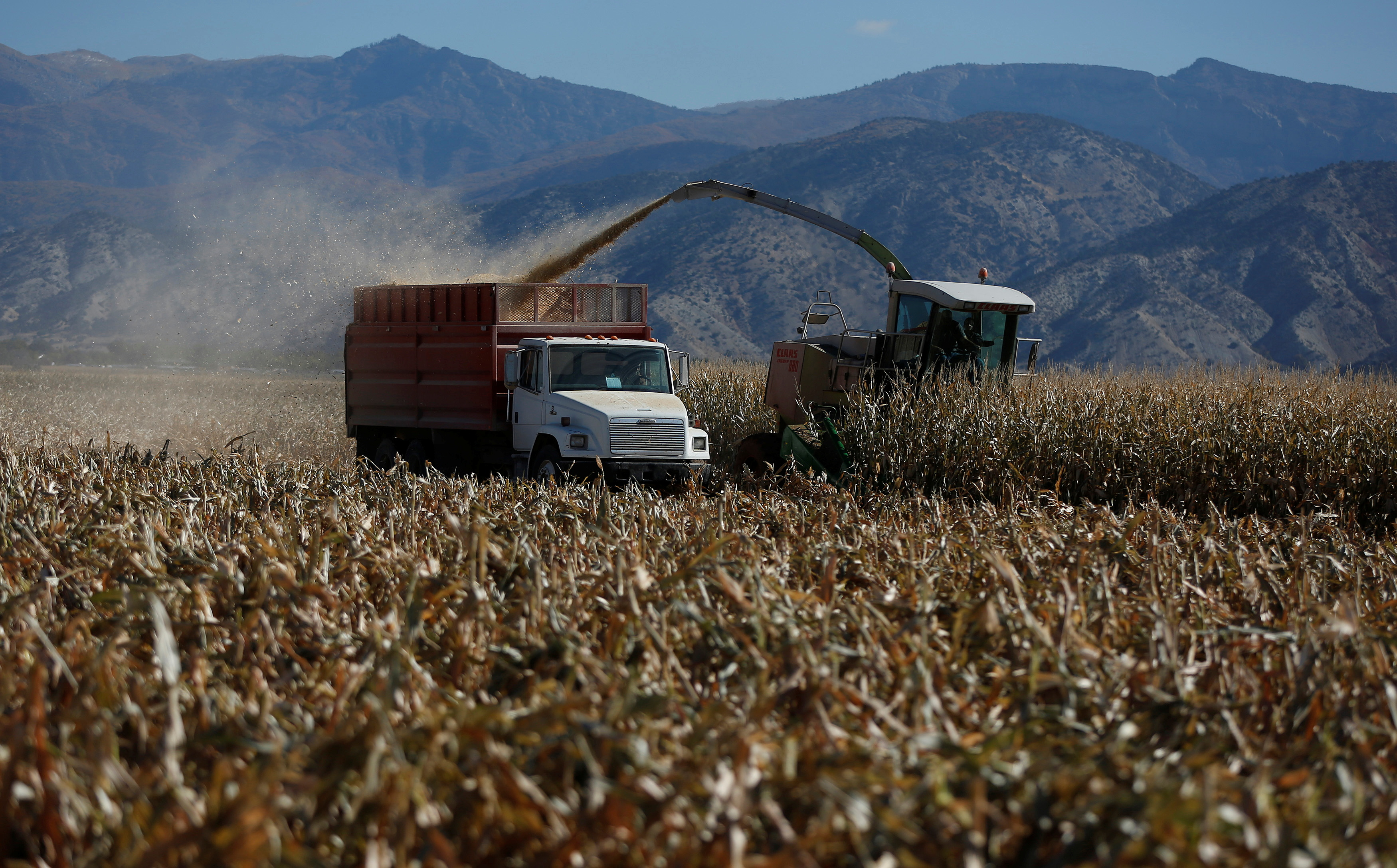Corn is harvested at the Kenison Farms in Levan, Utah, October 5, 2013. REUTERS/Jim Urquhart/File Photo