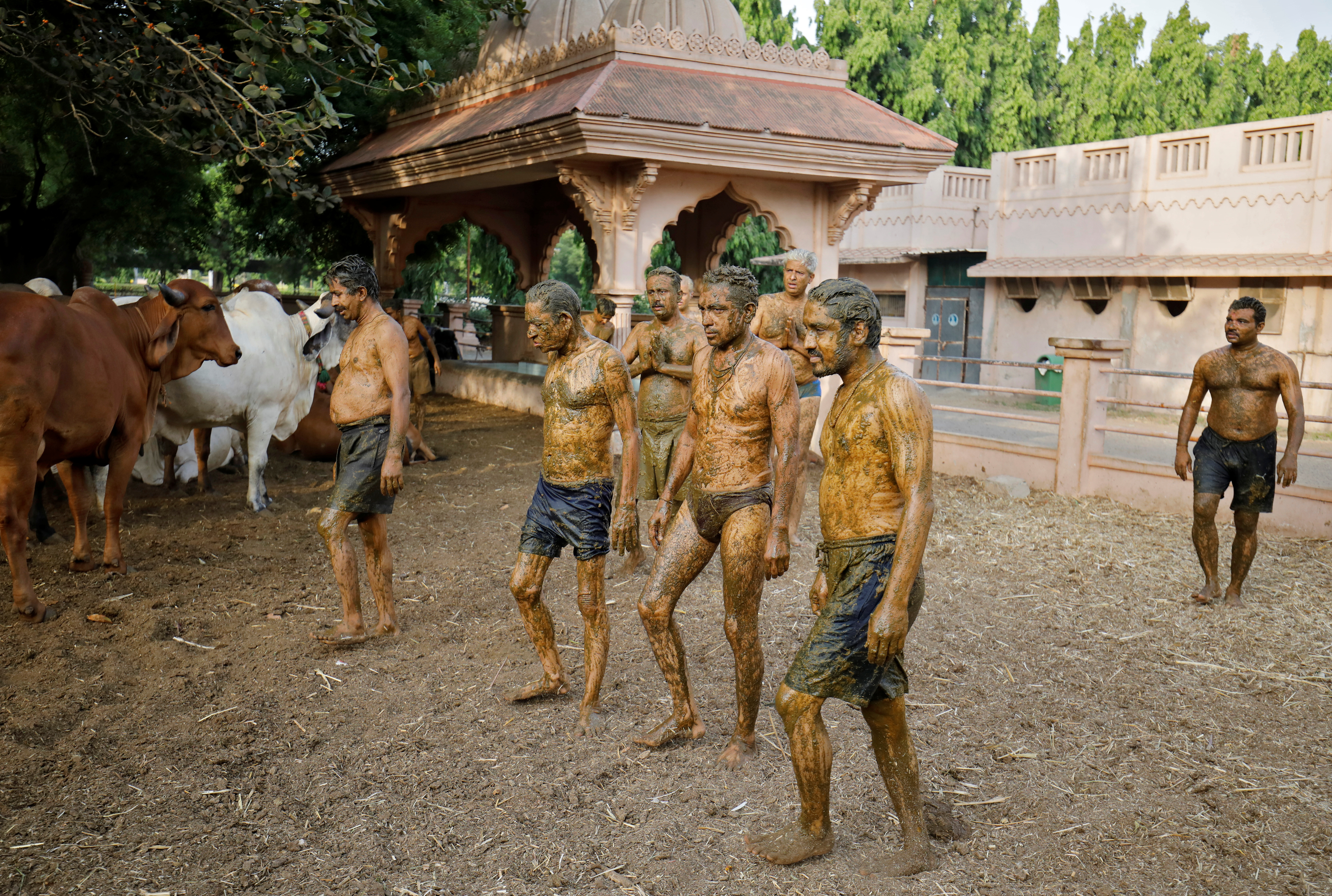 """People walk after applying cow dung on their bodies during """"cow dung therapy"""", believing it will boost their immunity to defend against the coronavirus disease (COVID-19) at the Shree Swaminarayan Gurukul Vishwavidya Pratishthanam Gaushala or cow shelter on the outskirts of Ahmedabad, India, May 9, 2021. REUTERS/Amit Dave"""
