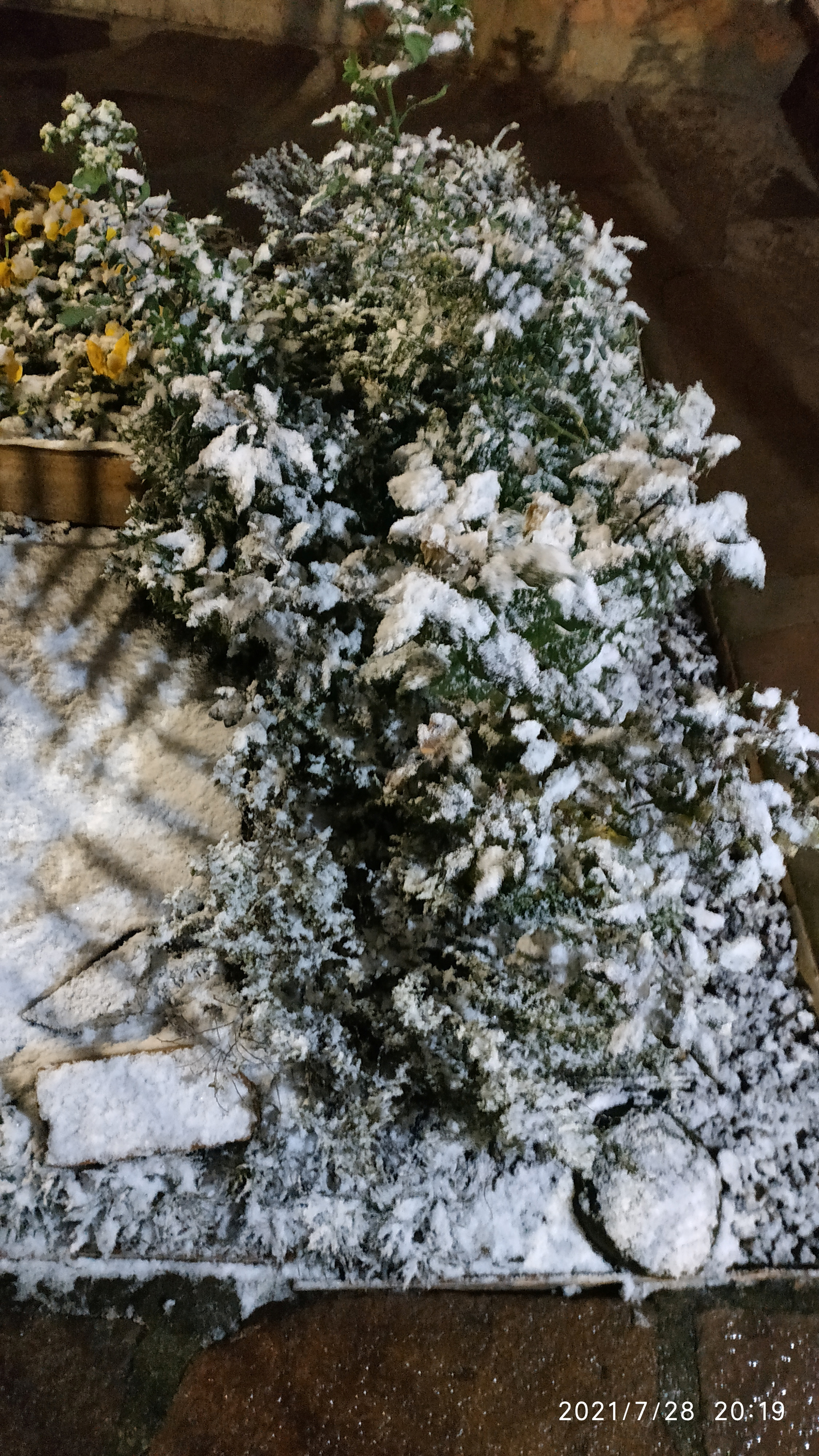 General view of plants covered in snow in Vacaria, Rio Grande do Sul, Brazil July 28, 2021, in this picture obtained from social media.  Picture taken July 28, 2021. TWITTER @Lho_nardo via REUTERS