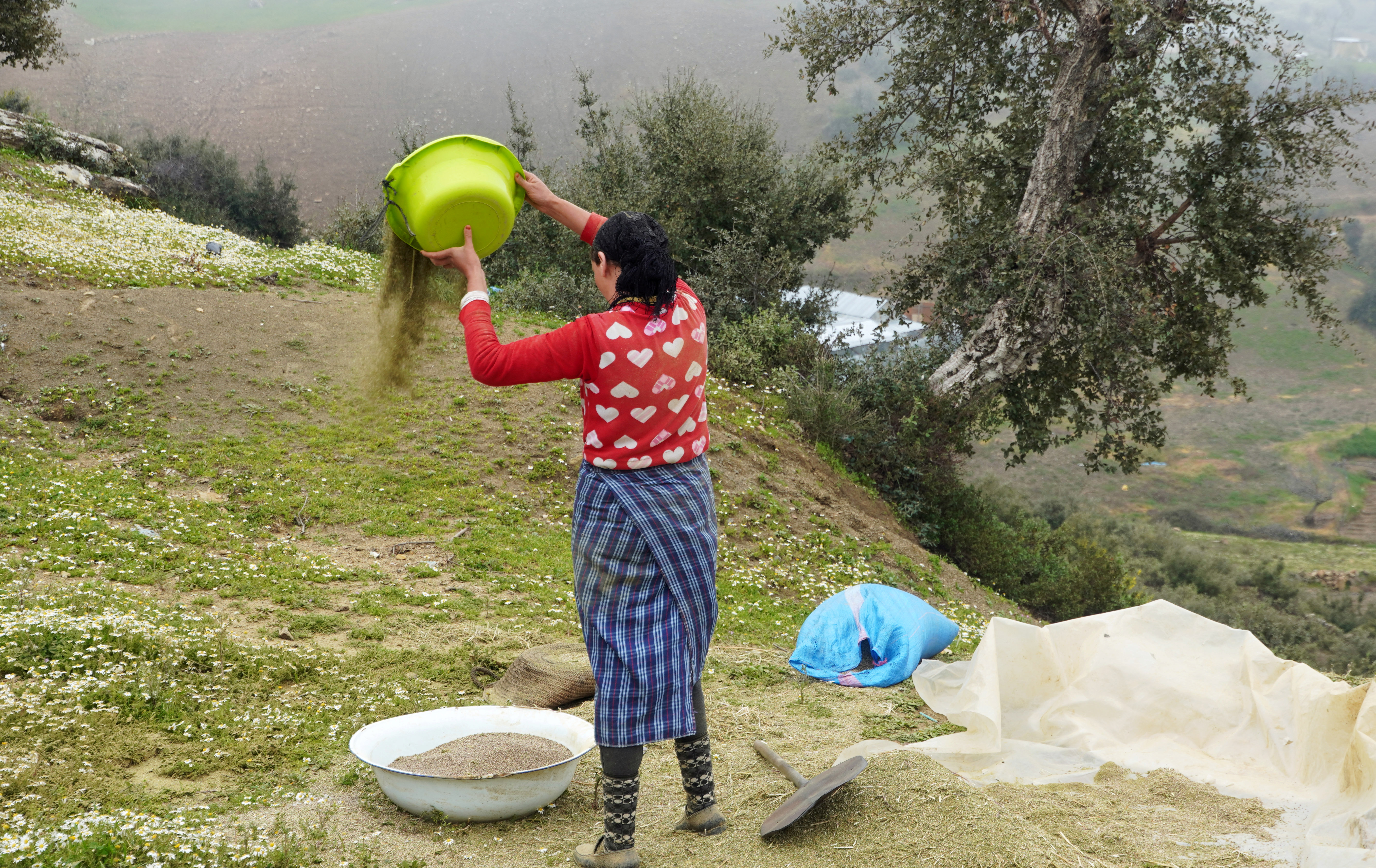 A farmer works on cannabis seeds at a village near Ketama, in the northern Rif mountains, Morocco March 13, 2021. Picture taken March 13, 2021. REUTERS/Stringer