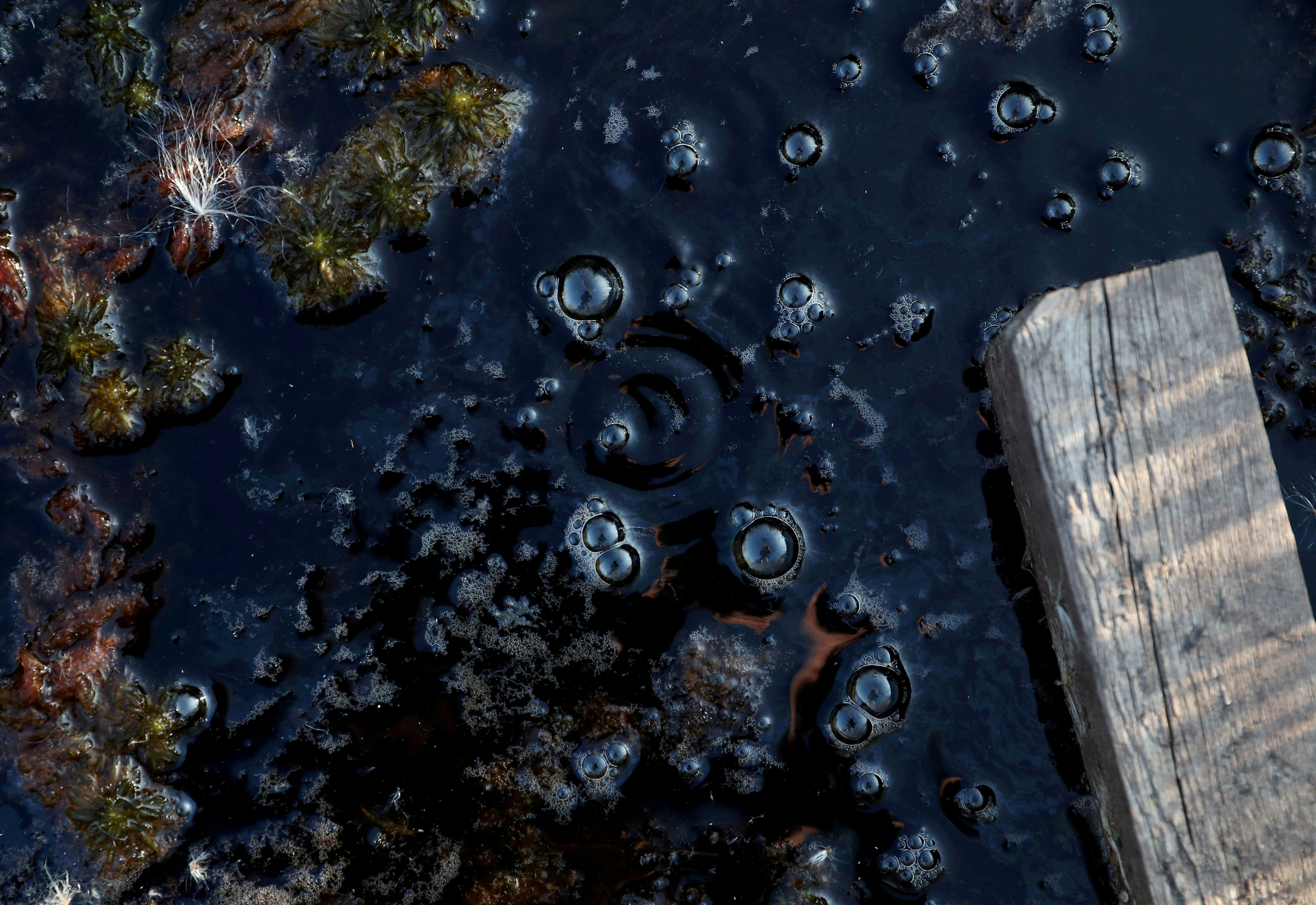 Methane bubbles are seen in an area of marshland at a research post at Stordalen Mire near Abisko, Sweden, August 1, 2019.REUTERS/Hannah McKay/File Photo