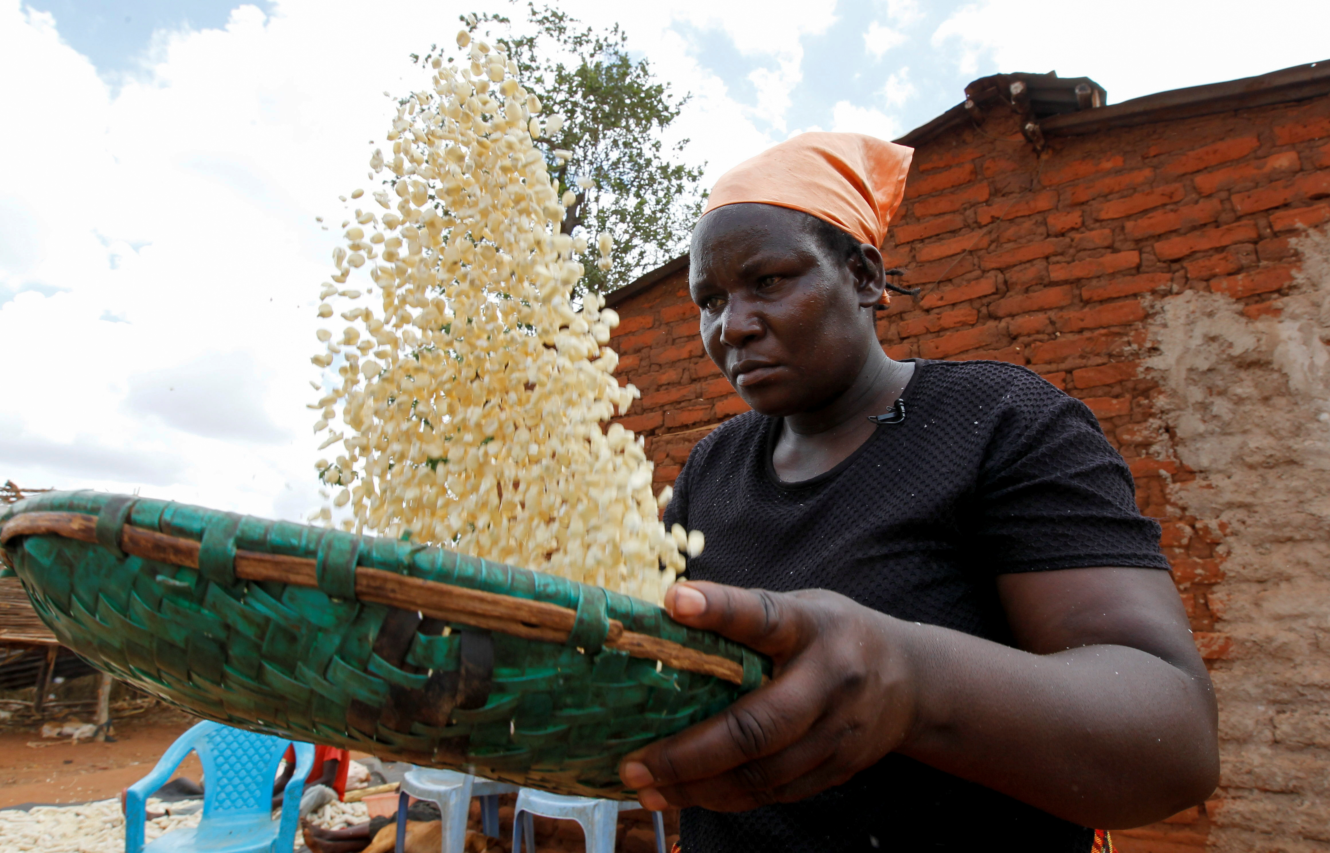 Waki Munyalo winnows maize collected from her harvest insured by Pula, an agricultural insurance company which helps small-scale farmers manage the risk associated with extreme climate conditions, in Kitui county, Kenya, March 17, 2021. Picture taken March 17, 2021. REUTERS/Monicah Mwangi