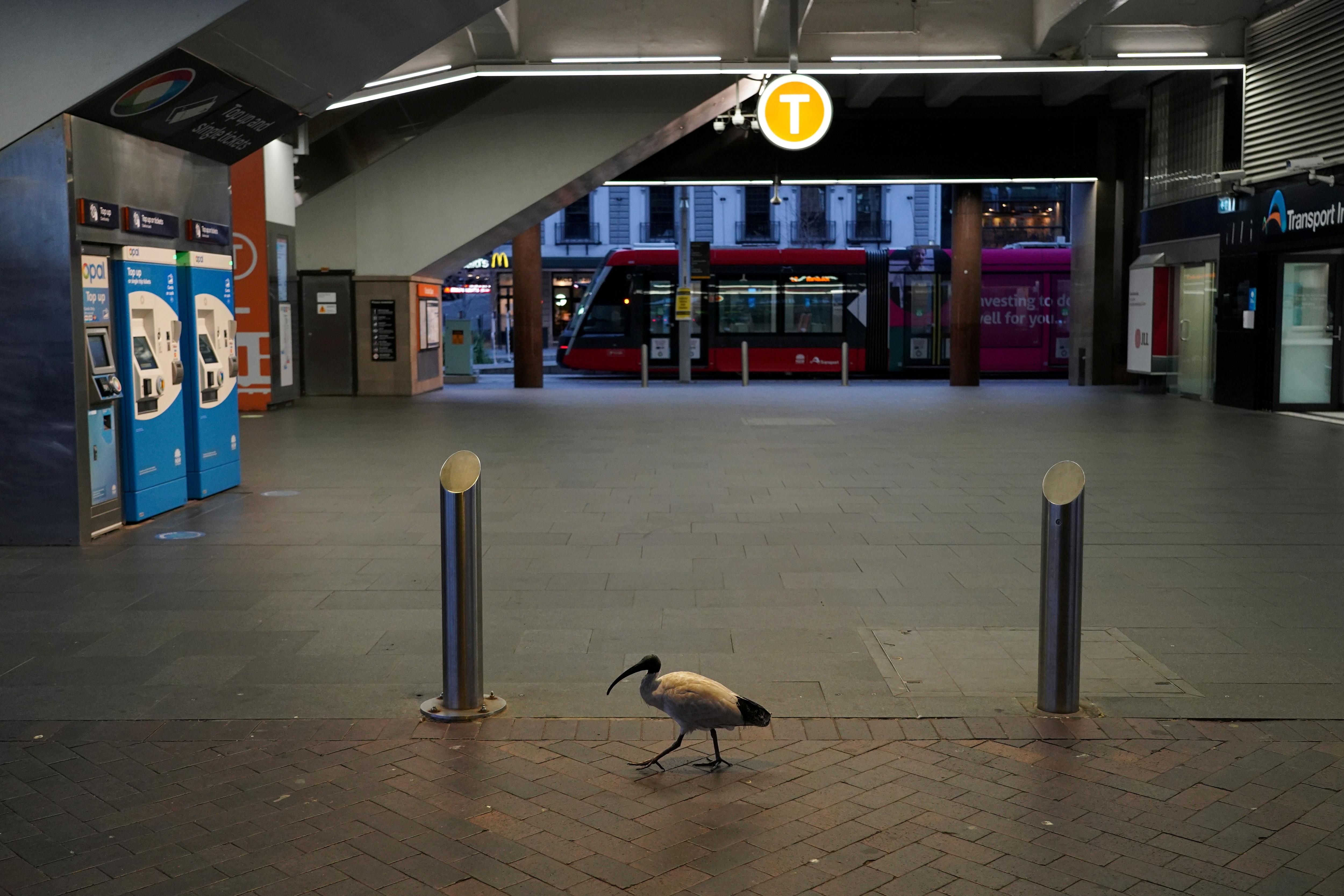 A lone bird walks past the quiet Circular Quay train station during a lockdown to curb the spread of a coronavirus disease (COVID-19) outbreak in Sydney, Australia, July 28, 2021.  REUTERS/Loren Elliott