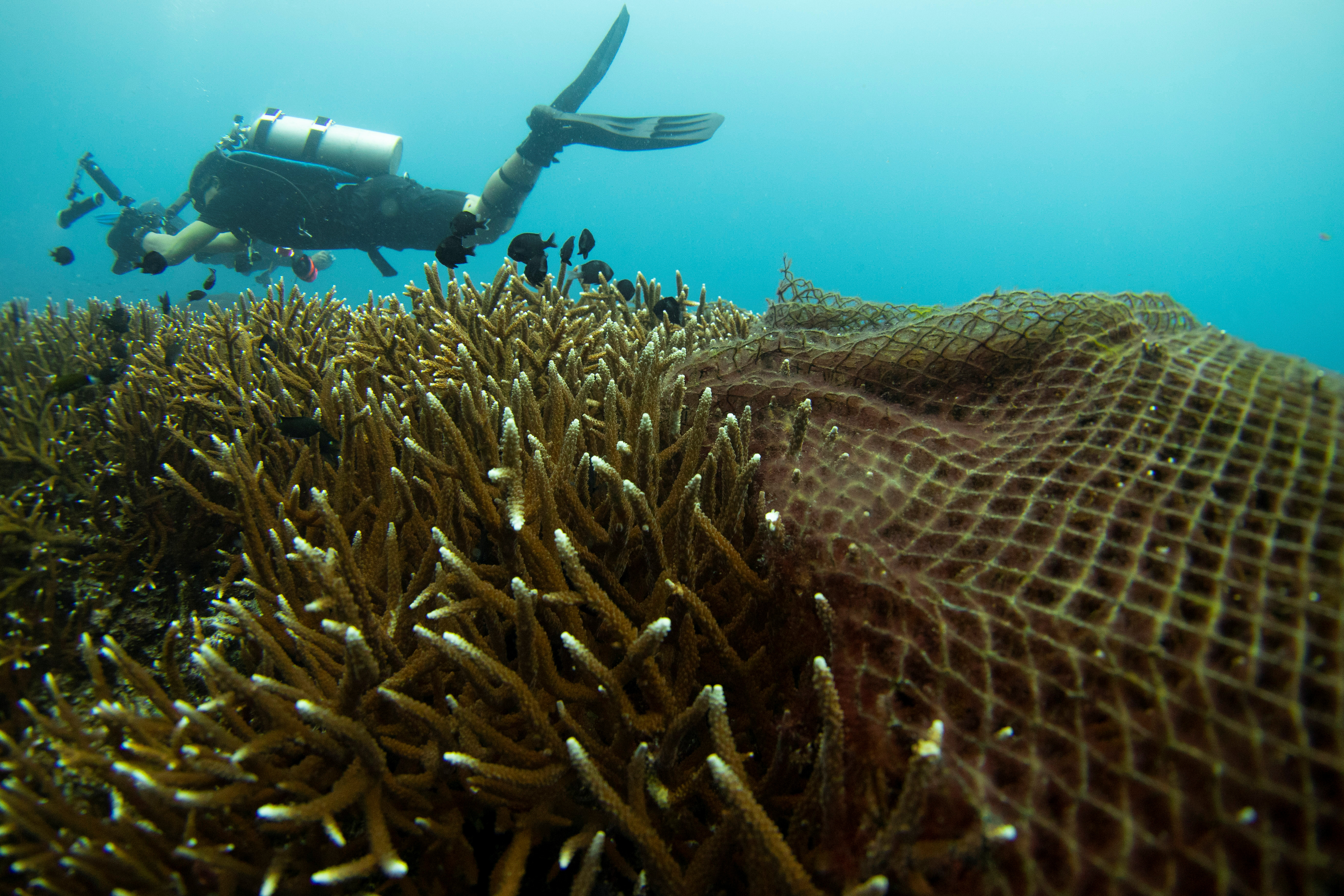 A diver swims past abandoned fishing nets covering a coral reef in a protected area of Ko Losin, where a group of volunteer divers and the Coastal Resources Research Center, helped by the Royal Thai Navy, removed 2,750 sq m of them, Ko Losin, Thailand June 19, 2021. Picture taken June 19, 2021. REUTERS/Jorge Silva
