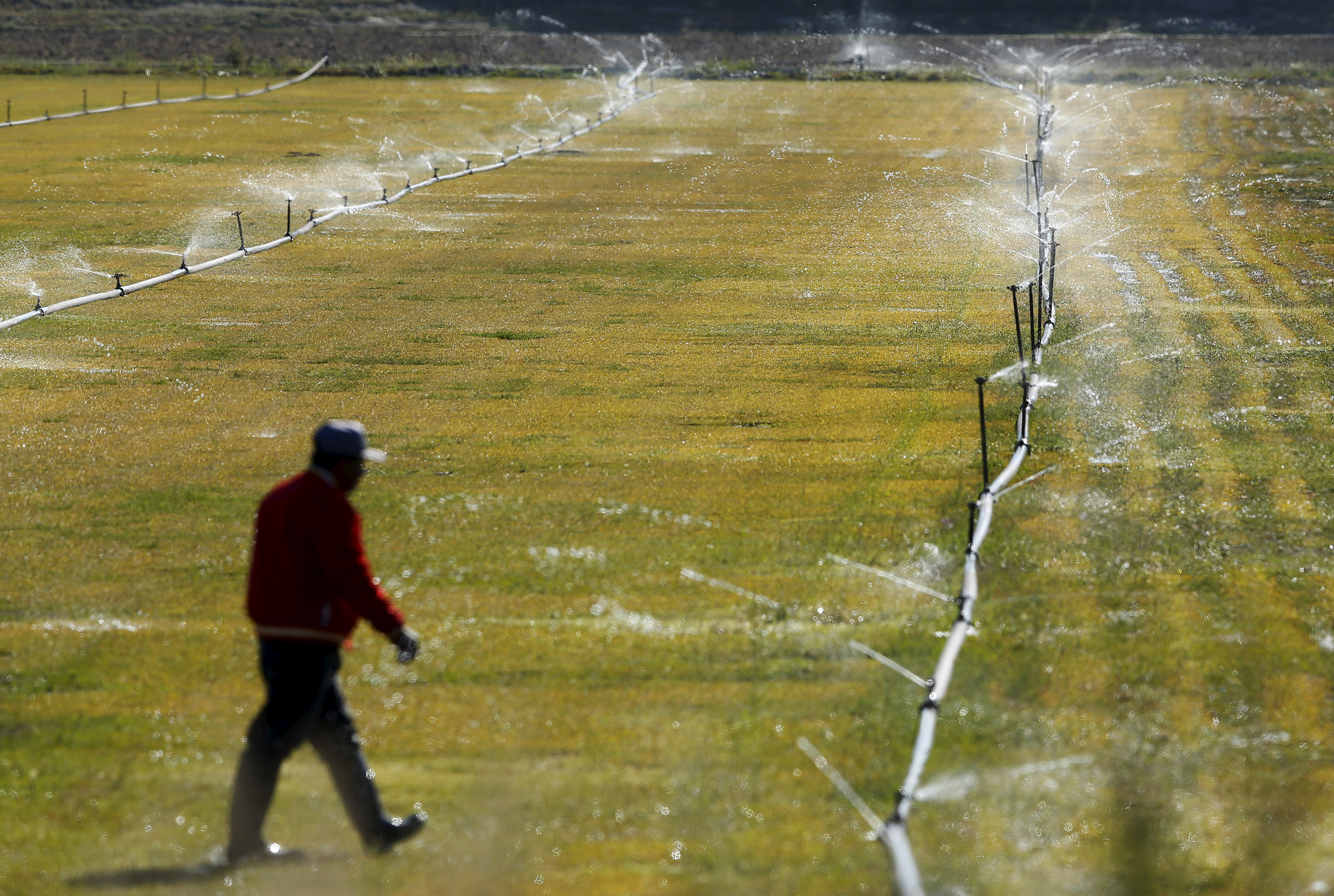 A worker adjusts a water irrigation system in a field near San Ysidro, California March 31, 2016.  REUTERS/Mike Blake