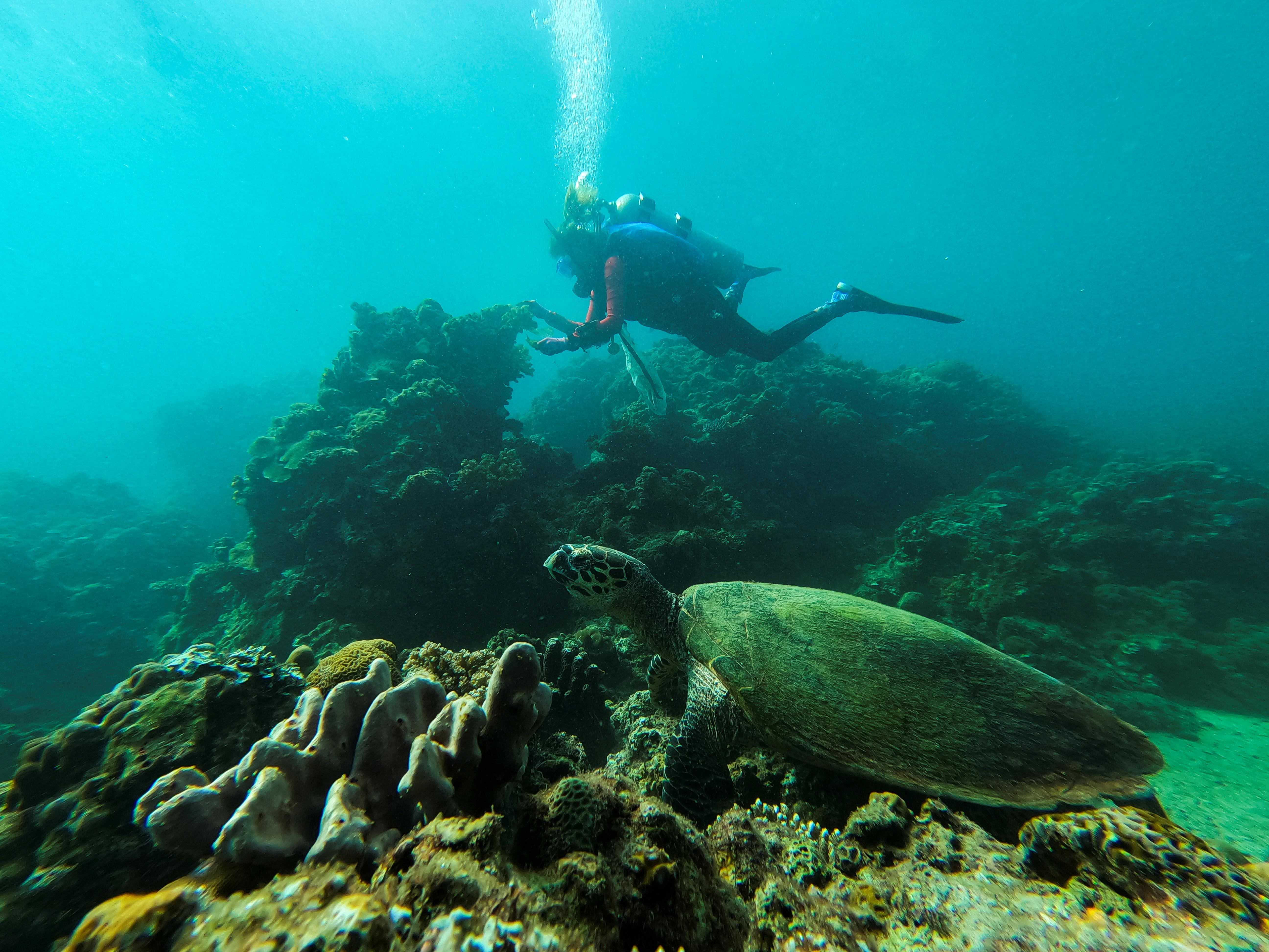 Huấn luyện viên lặn Carmela Sevilla nhặt rác nhựa trong khi một con rùa biển được nhìn thấy ở phía trước trong một chuyến đi dọn dẹp dưới nước ở Bauan, tỉnh Batangas, Philippines, ngày 18 tháng 9 năm 2021. REUTERS / Peter Blaza