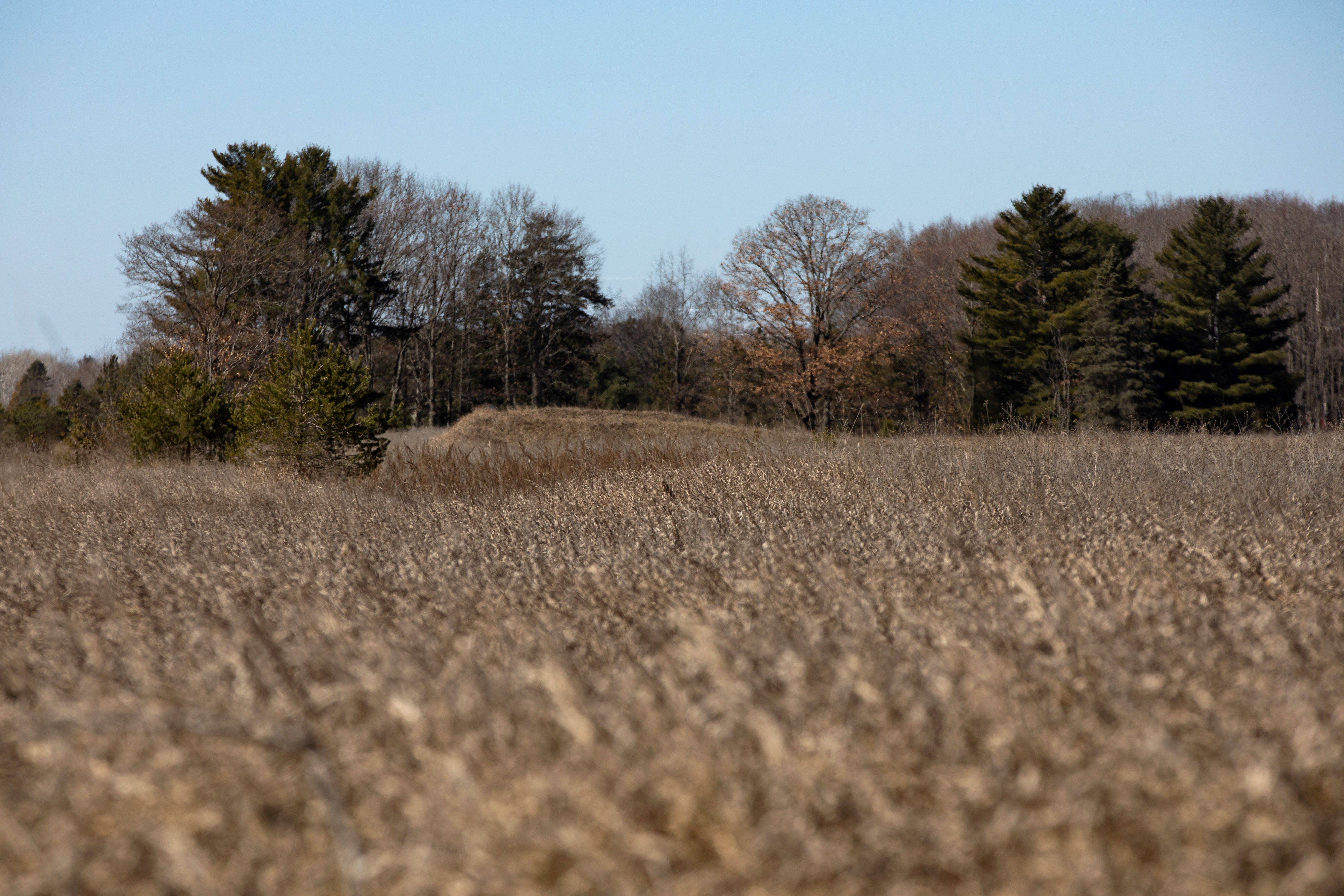 A piece of land that has a federal drilling lease issued for oil and gas development is seen in Mecosta County, Michigan, U.S., March 20, 2021. REUTERS/Emily Elconin