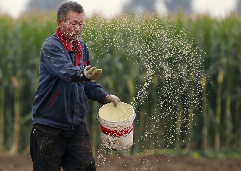 A farmer plants seeds in a corn field at a farm in Gaocheng, Hebei province, China, September 30, 2015. REUTERS/Kim Kyung-Hoon/File Photo