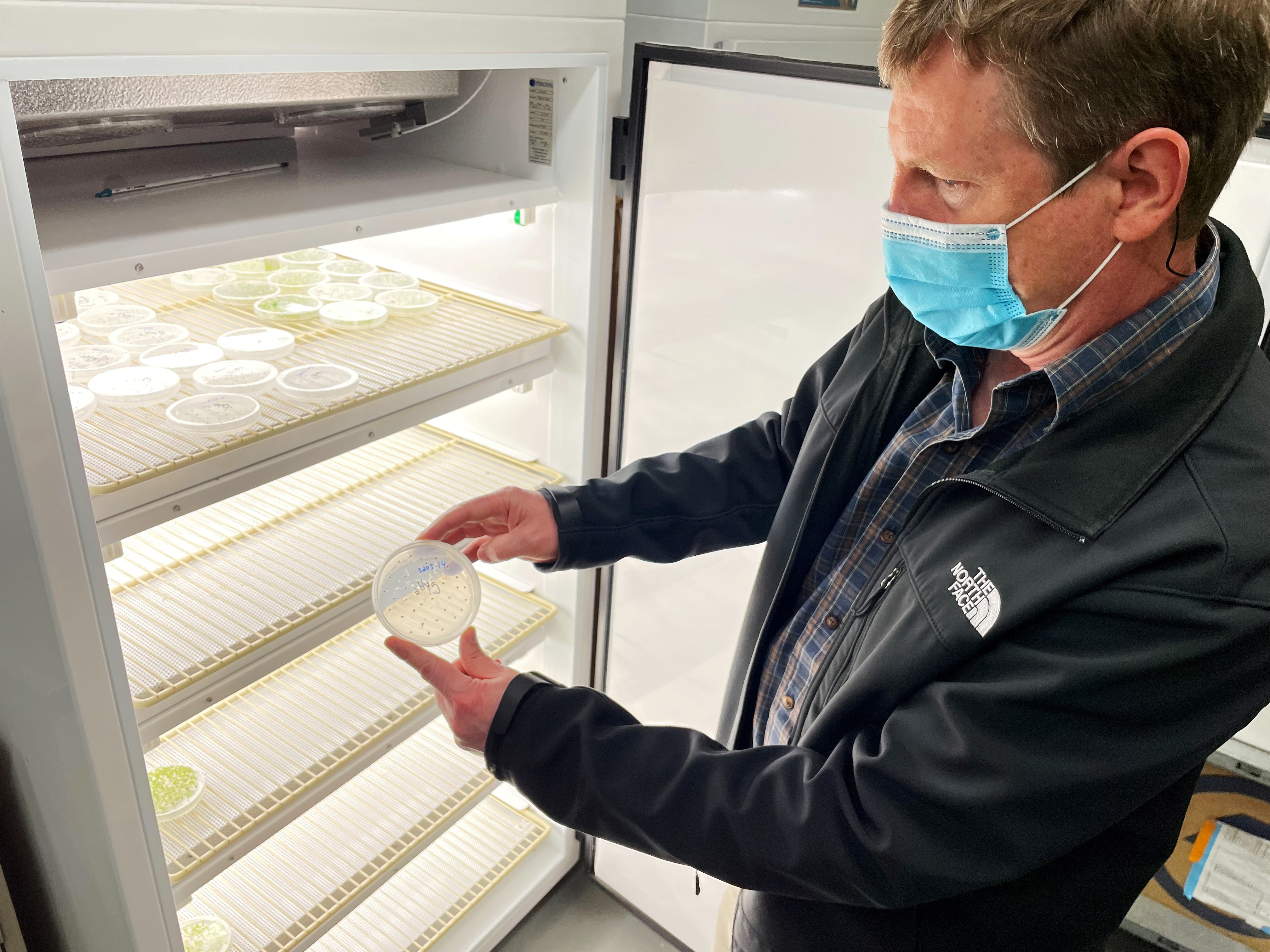 Geneticist John Sedbrook inspects covercress seeds at an Illinois State University laboratory in Normal, Illinois, U.S. May 6, 2021. Picture taken May 6, 2021. REUTERS/Karl Plume