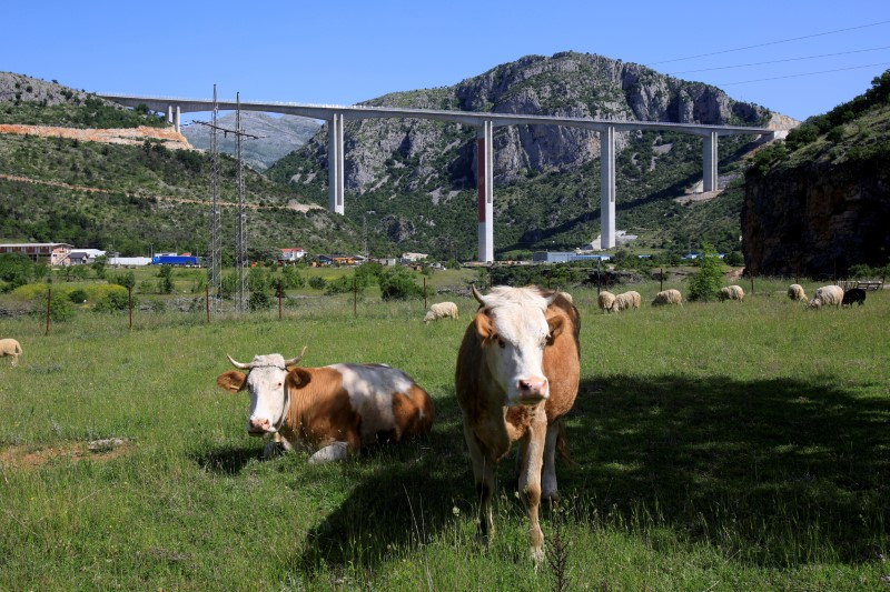 Cattle graze near Moracica bridge on the first, Bar-Boljare leg of a highway in Montenegro financed with a large Chinese loan that has sent Montenegrin debt soaring and forced the country to seek help from the European Union, May 25, 2021. REUTERS/Stevo Vasiljevic/File Photo