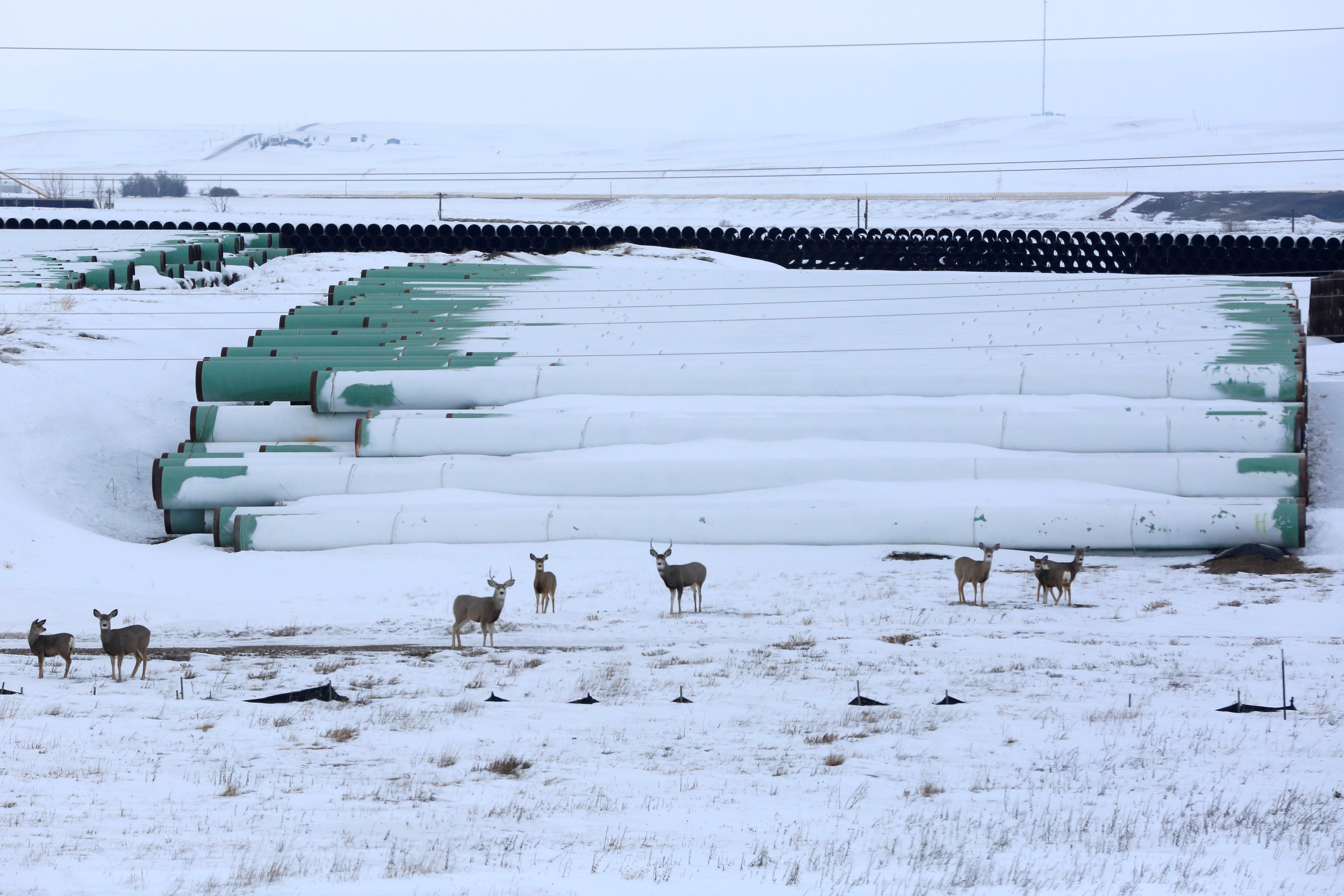 A depot used to store pipes for TC Energy Corp's planned Keystone XL oil pipeline is seen in Gascoyne, North Dakota, January 25, 2017.  REUTERS/Terray Sylvester