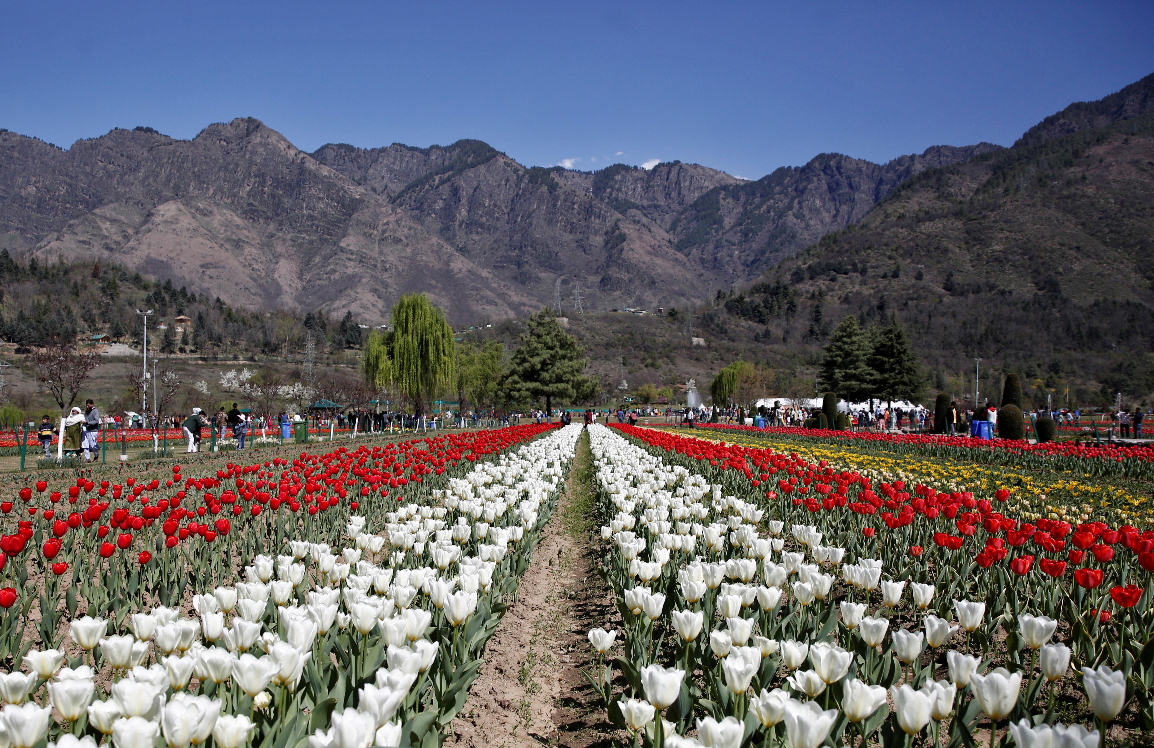 Visitors walk inside Kashmir's tulip garden on the foothills of Zabarwan mountain range in Srinagar April 2, 2021. REUTERS/Danish Ismail/File Photo