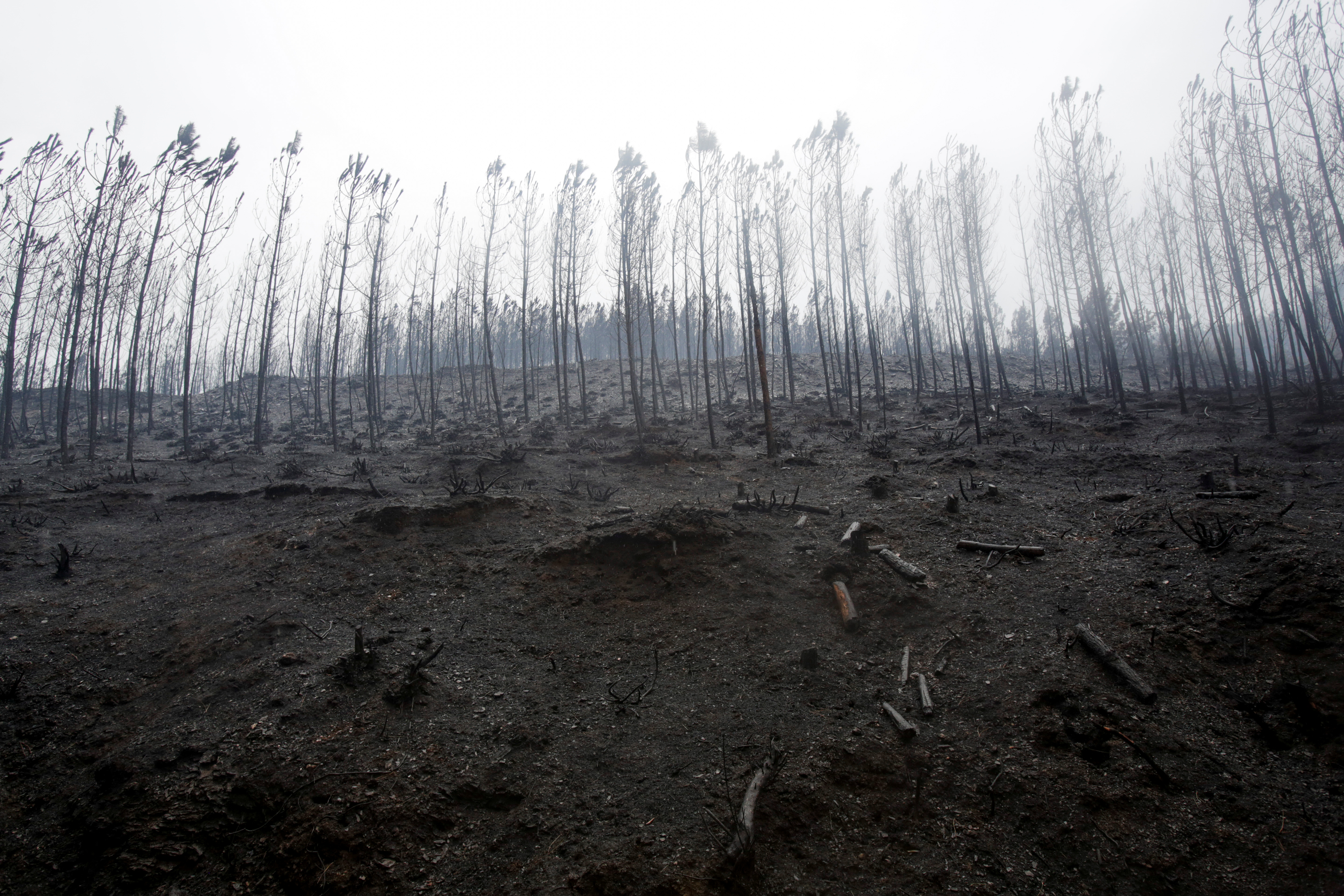 Burnt trees are seen after a wildfire near Ribas de Sil, northwestern Spain, September 7, 2021. REUTERS/Miguel Vidal