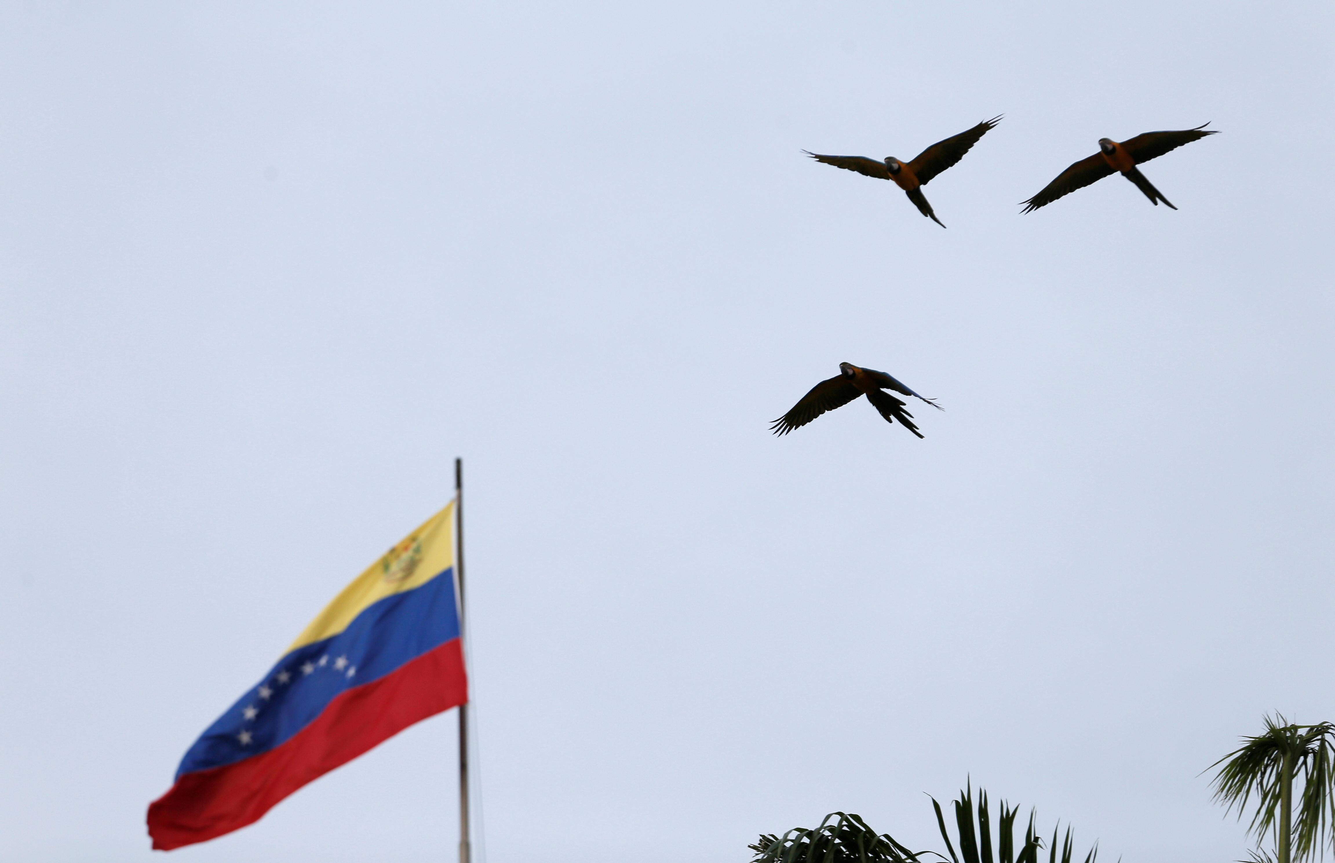 Birds fly next to a Venezuelan flag in Caracas, Venezuela January 12, 2021. REUTERS/Manaure Quintero/File Photo