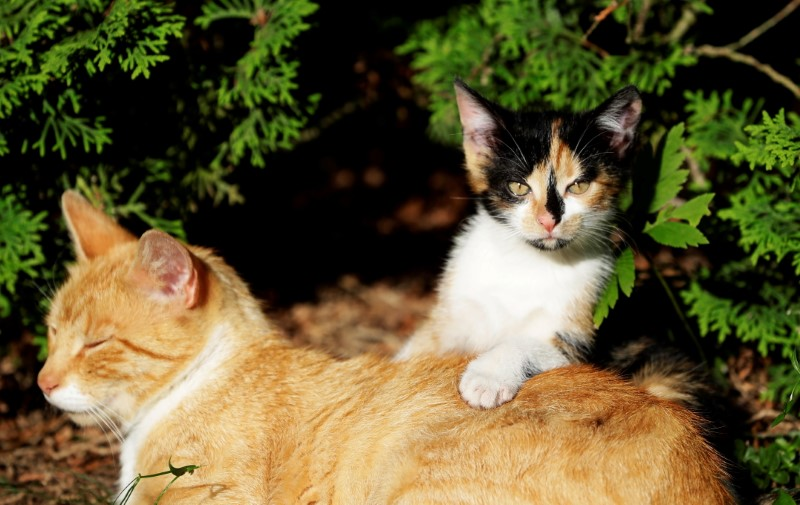 A cat and a kitten are seen in the village of Krompach near the town of Cvikov, Czech Republic, July 11, 2020. Picture taken July 11, 2020.  REUTERS/David W Cerny/File Photo
