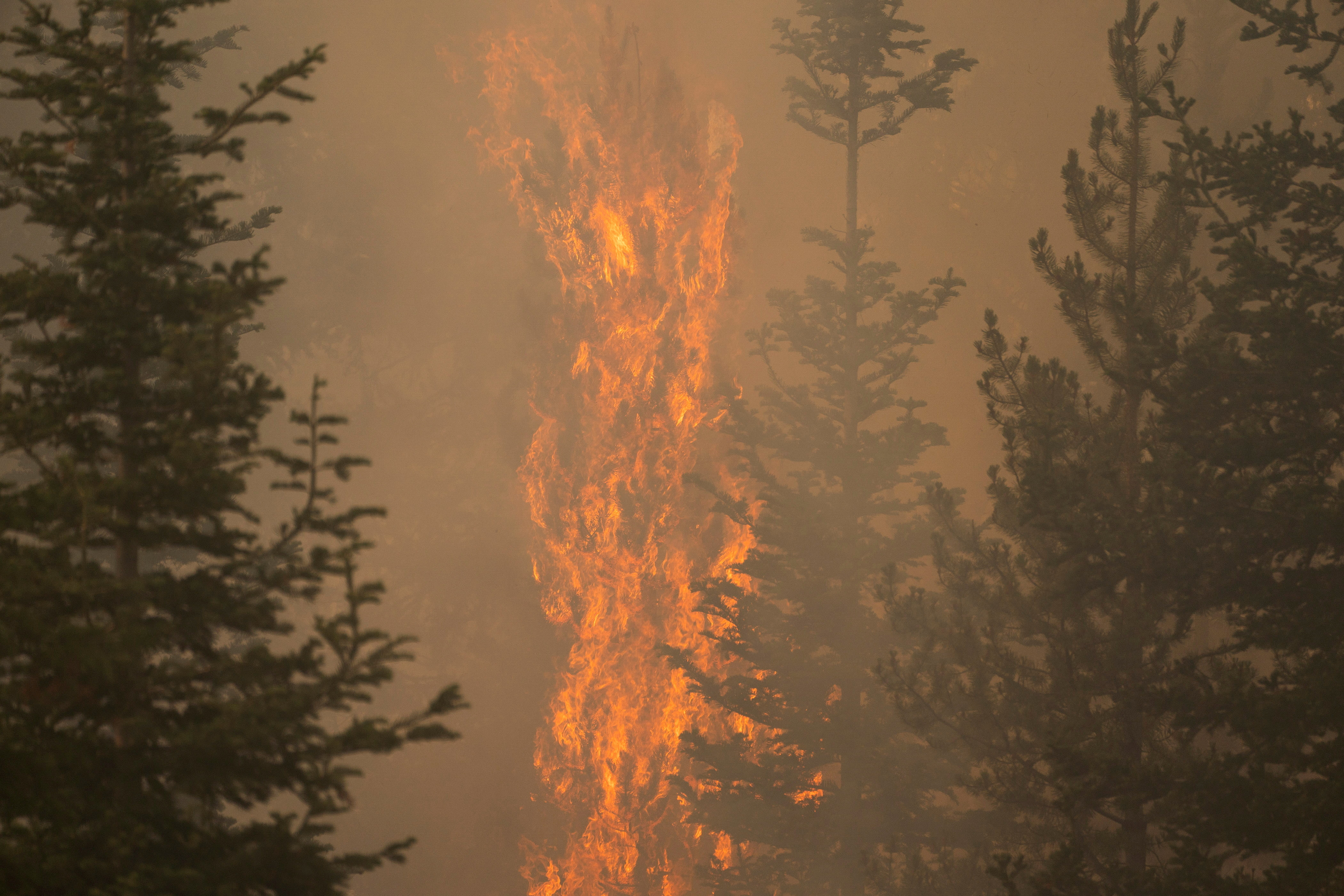 The Bootleg Fire burns through vegetation near Paisley, Oregon, U.S., July 20, 2021. REUTERS/David Ryder