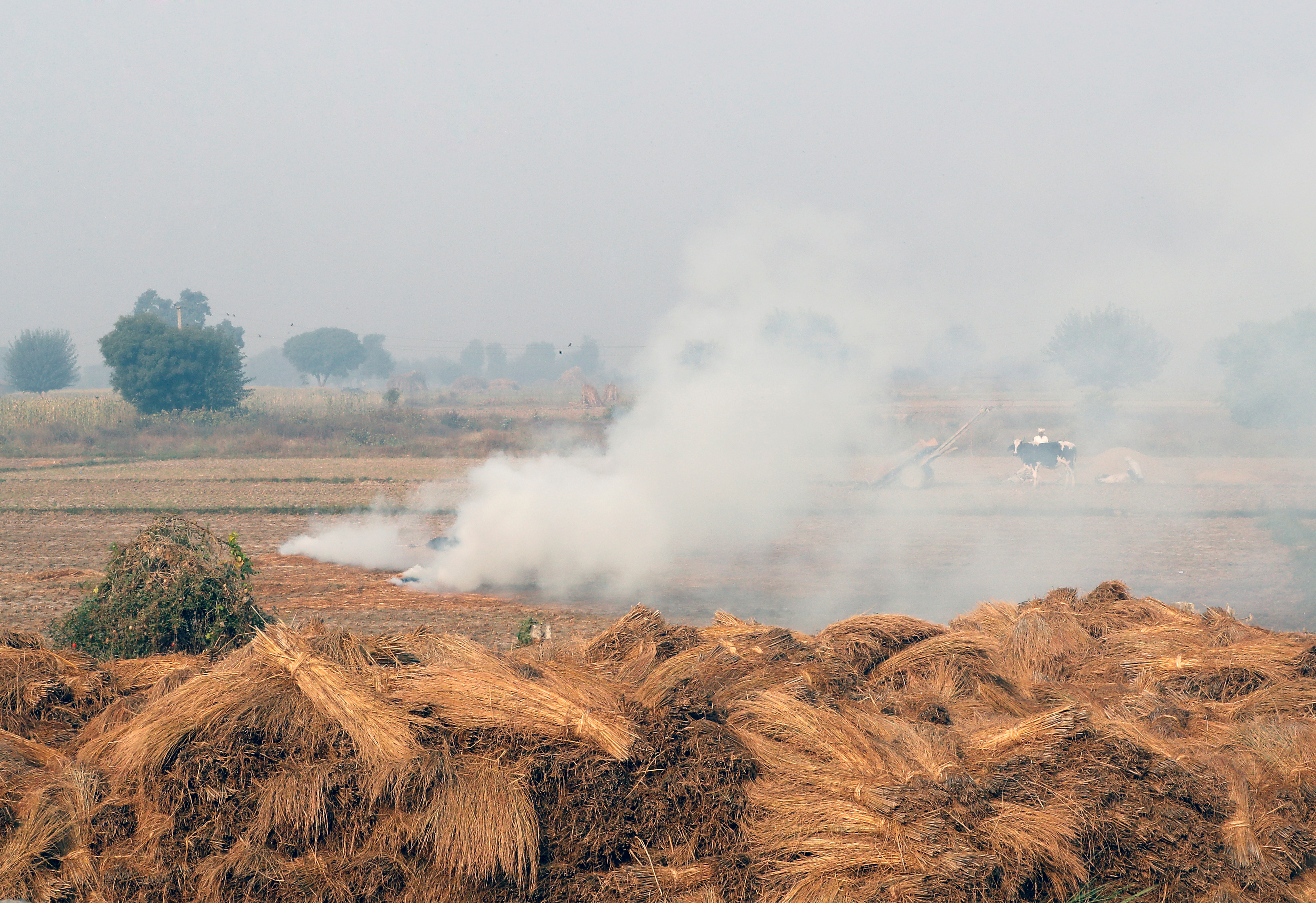 Smoke billows from paddy waste stubble as it burns in a field near Jewar, in the northern state of Uttar Pradesh, India November 6, 2018. REUTERS/Altaf Hussain
