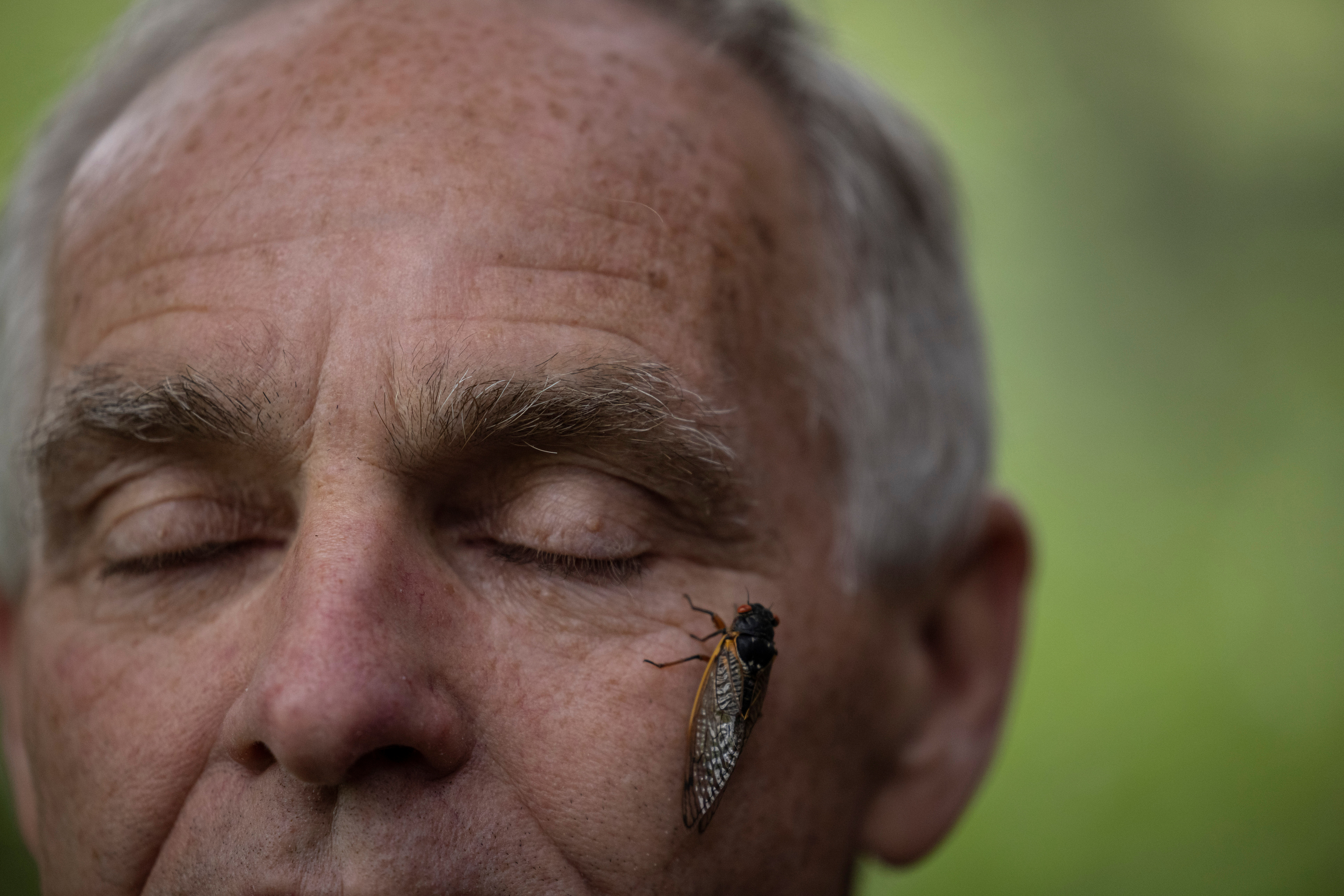 A newly emerged adult cicada stands on entomologist Michael Raupp's face, at the university of Maryland campus in College Park, Maryland U.S., May 14, 2021.