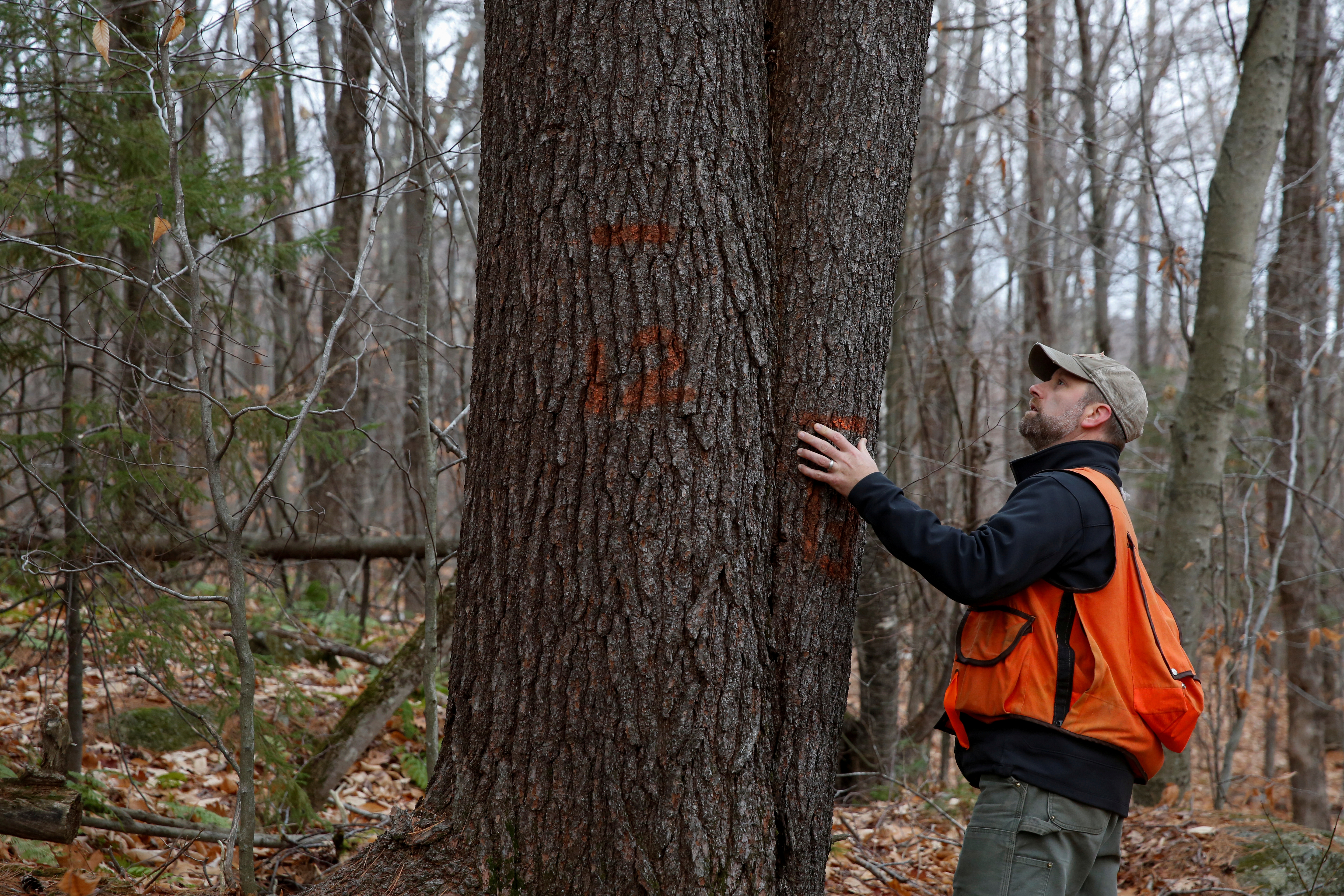 Chris Pryor, director of forest stewardship at New England Forestry Foundation, looks at marked trees in the Hersey Mountain Wilderness in New Hampton, New Hampshire, U.S., December 4, 2020. REUTERS/Elizabeth Frantz