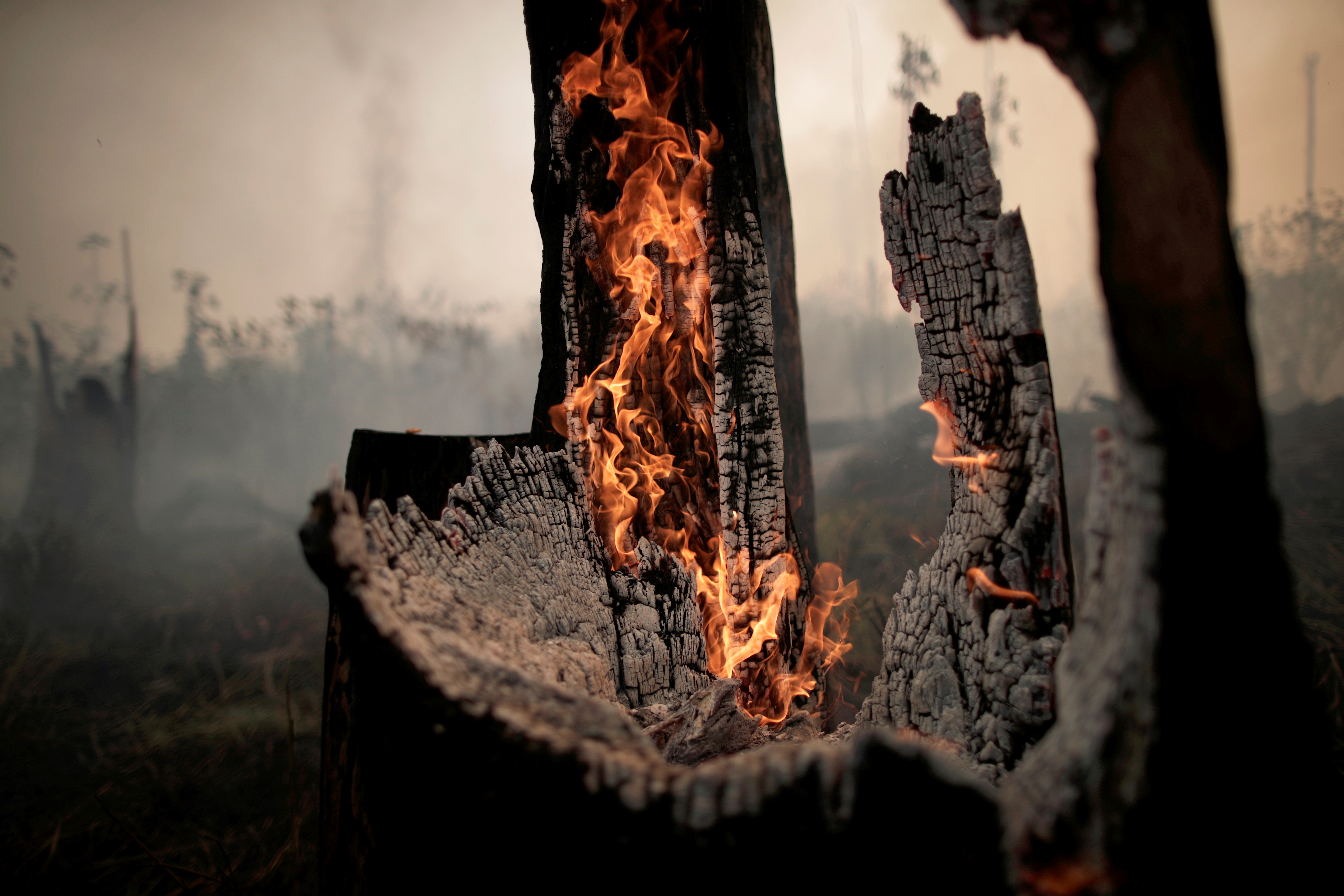 A charred trunk is seen on a tract of the Amazon jungle, that was recently burned by loggers and farmers, in Porto Velho, Brazil August 23, 2019.  REUTERS/Ueslei Marcelino