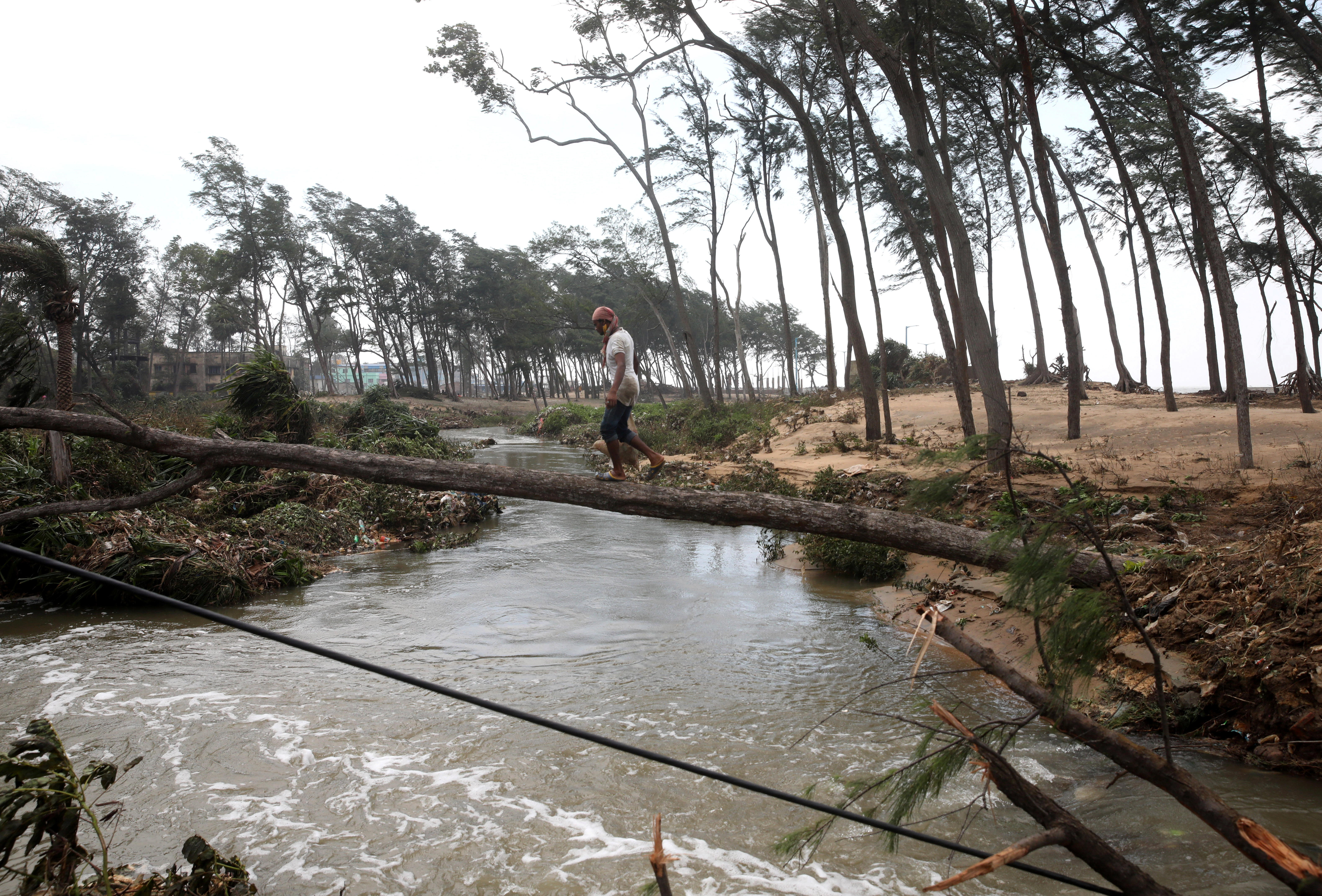 A man crosses a canal on a fallen tree following Cyclone Yaas in Digha, Purba Medinipur district in the eastern state of West Bengal, India, May 27, 2021. REUTERS/Rupak De Chowdhuri