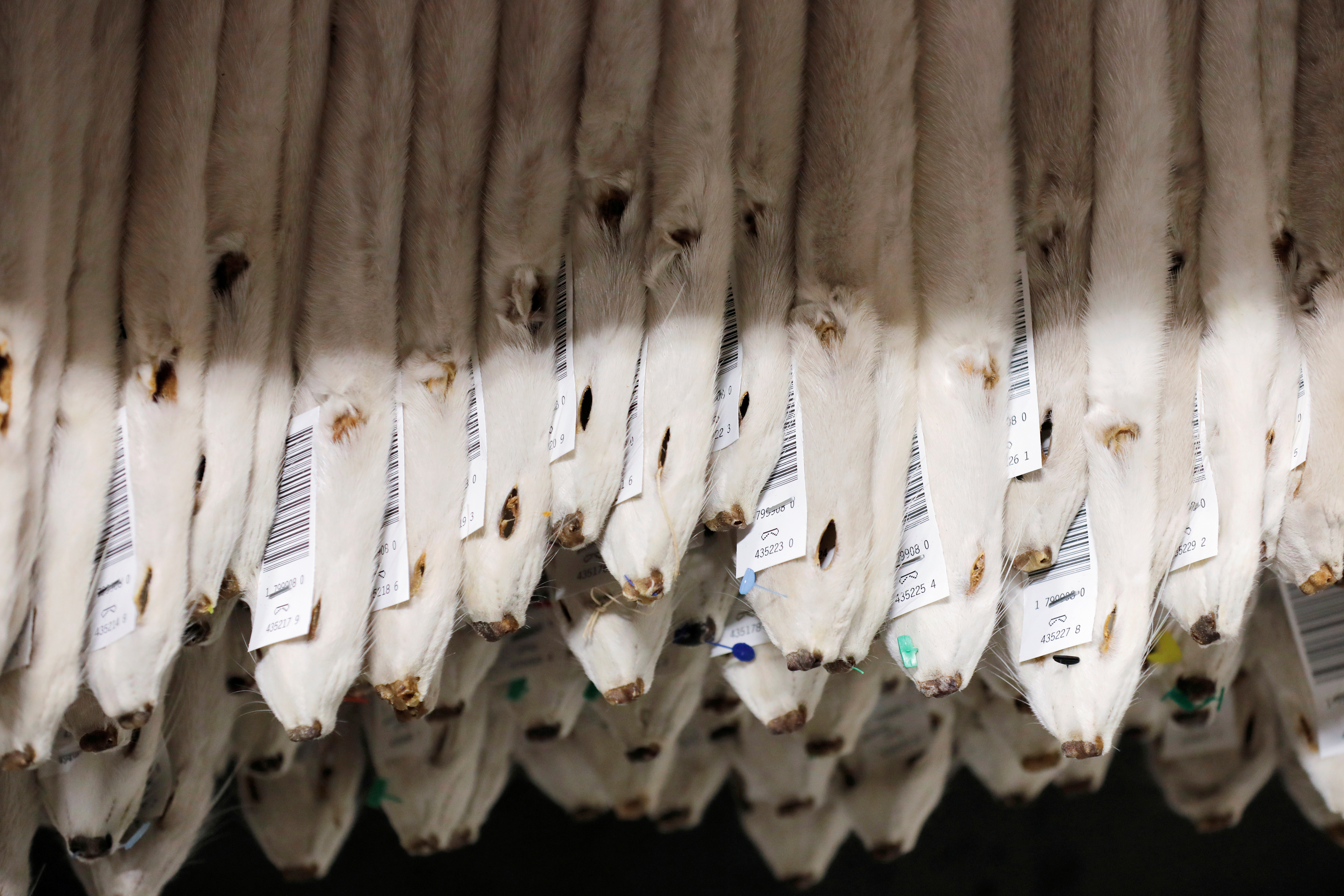 Labeled mink pelts are seen in storage at Kopenhagen Fur during the outbreak of the coronavirus disease (COVID-19) in Glostrup, Denmark, December 7, 2020. REUTERS/Andrew Kelly