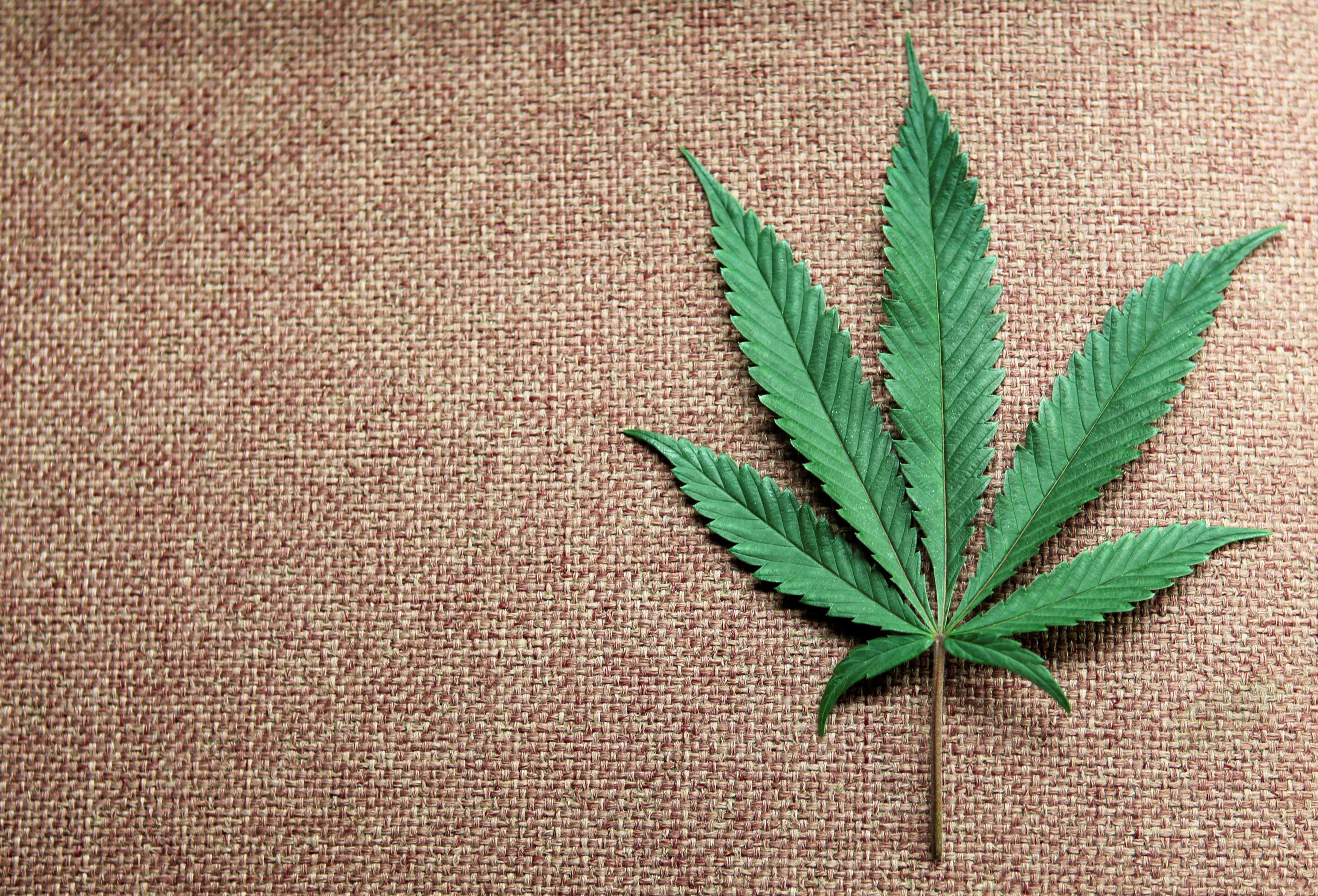 A marijuana leaf is displayed at Canna Pi medical marijuana dispensary in Seattle, Washington, November 27, 2012.   REUTERS/Anthony Bolante