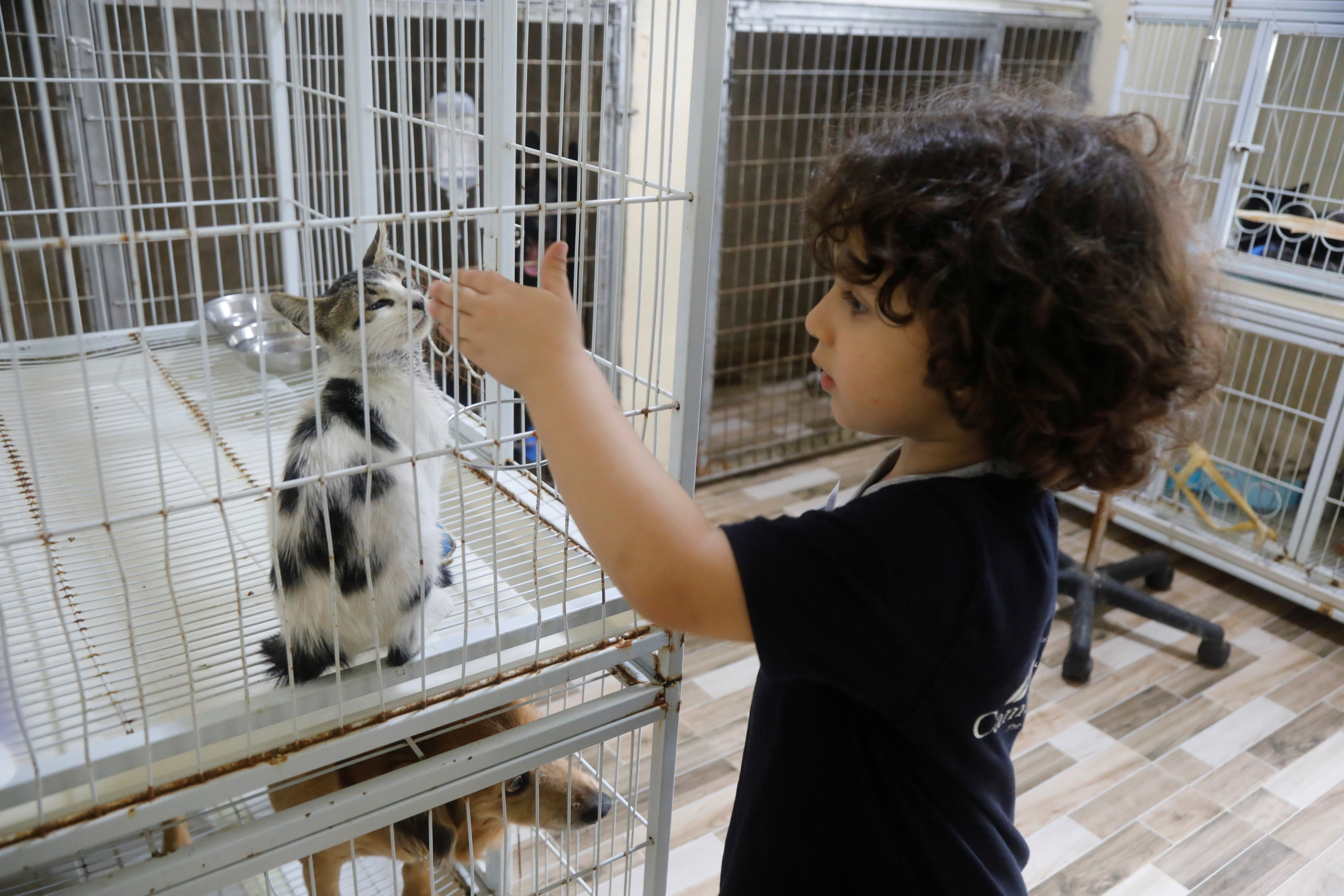 A Palestinian child pets a cat at Royal Care Vet Clinic that offers animals medical and grooming care, in Nablus, the Israeli-occupied West Bank, September 7, 2021. REUTERS/Raneen Sawafta