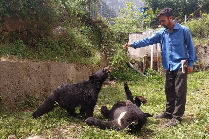 A student plays with a pair of Asian black bears, rescued a year ago near the Line of Control (LoC), at the Wildlife and Fisheries department in a Dawarian village in Neelum Valley, Pakistan-administrated Kashmir June 12, 2021. REUTERS/Abu Arqam Naqash