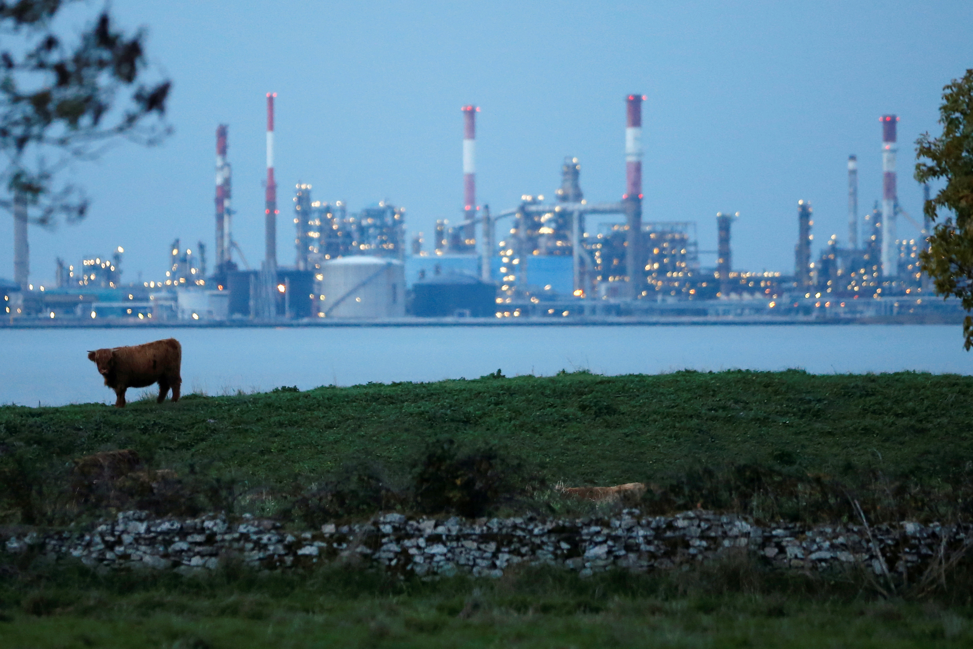 A cow grazes on land in front of an oil refinery in Corsept, western France, October 26, 2015. REUTERS/Stephane Mahe/File Photo