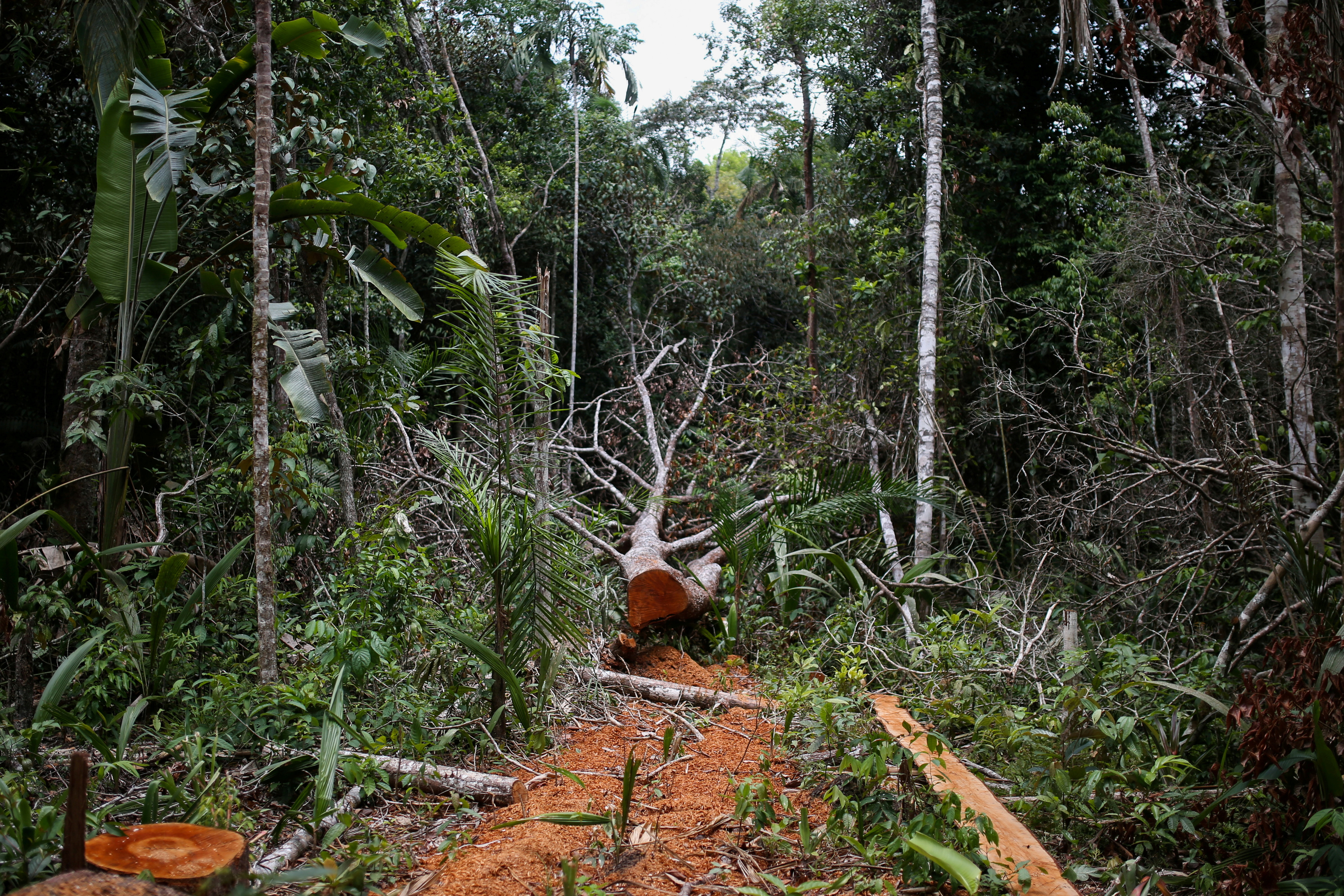A felled tree is seen in the middle of a deforested area of the Yari plains, in Caqueta, Colombia March 3, 2021. Picture taken March 3, 2021. REUTERS/Luisa Gonzalez