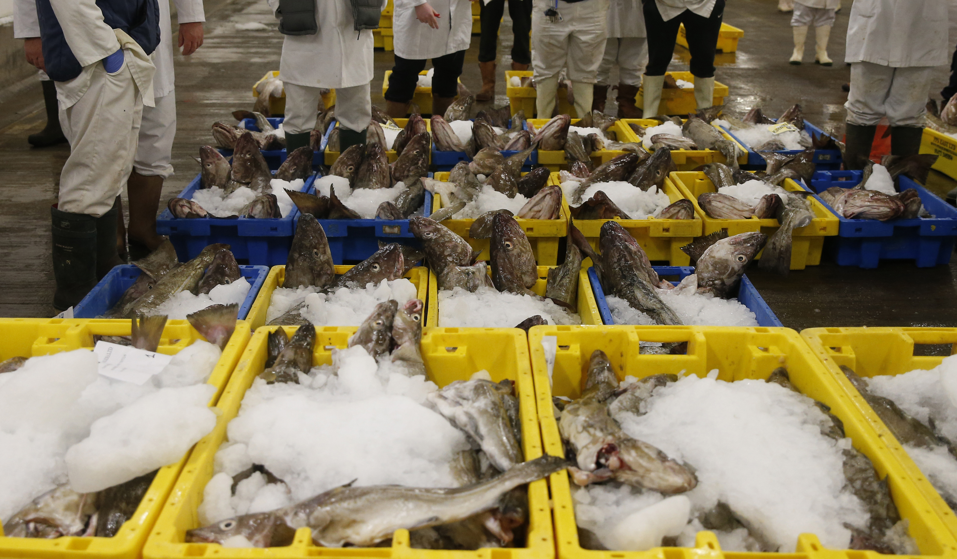 Fish buyers stand next to boxes of cod during the daily auction at the fish market in Grimsby, Britain November 17, 2015. The market handles about 15,000 tonnes of fish per year, but since the decline of the local fishing fleet most supplies come from Iceland and Norway. REUTERS/Phil Noble