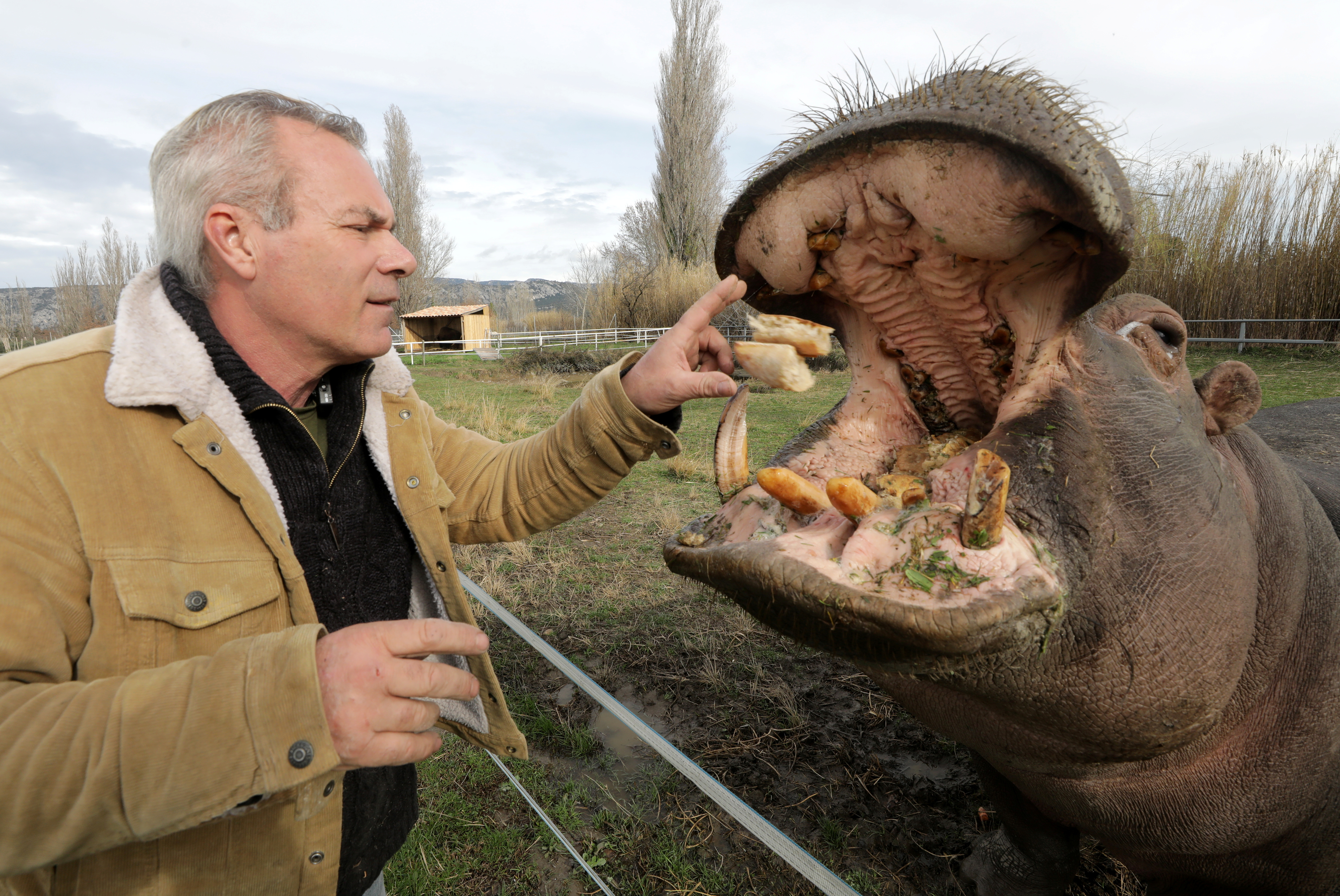 William Kerwich, owner of the Royal Circus and President of the Circus and Shows Animals Union, feeds Molly the hippopotamus at the circus home base in Senas as circus shows remained shut as part of COVID-19 restrictions measures to fight the coronavirus disease outbreak in France, February 9, 2021. REUTERS/Eric Gaillard