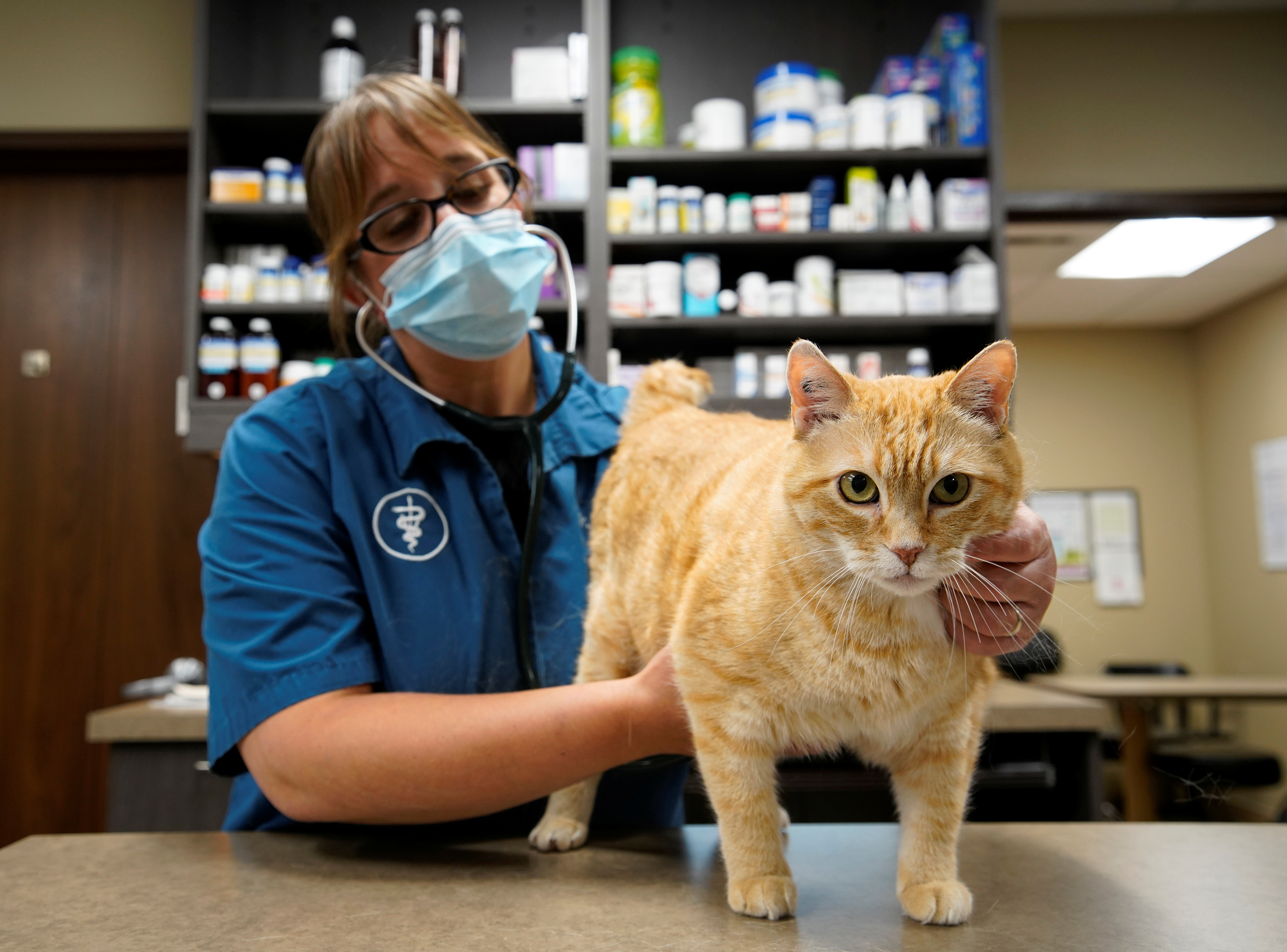 Dr. Liz Ruelle examines a cat at the Wild Rose Cat clinic in Calgary, Alberta, Canada, July 14, 2021. Dr. Ruelle uses a new app called Tably that reads cat's faces and helps her monitor a cat's health. REUTERS/Todd Korol