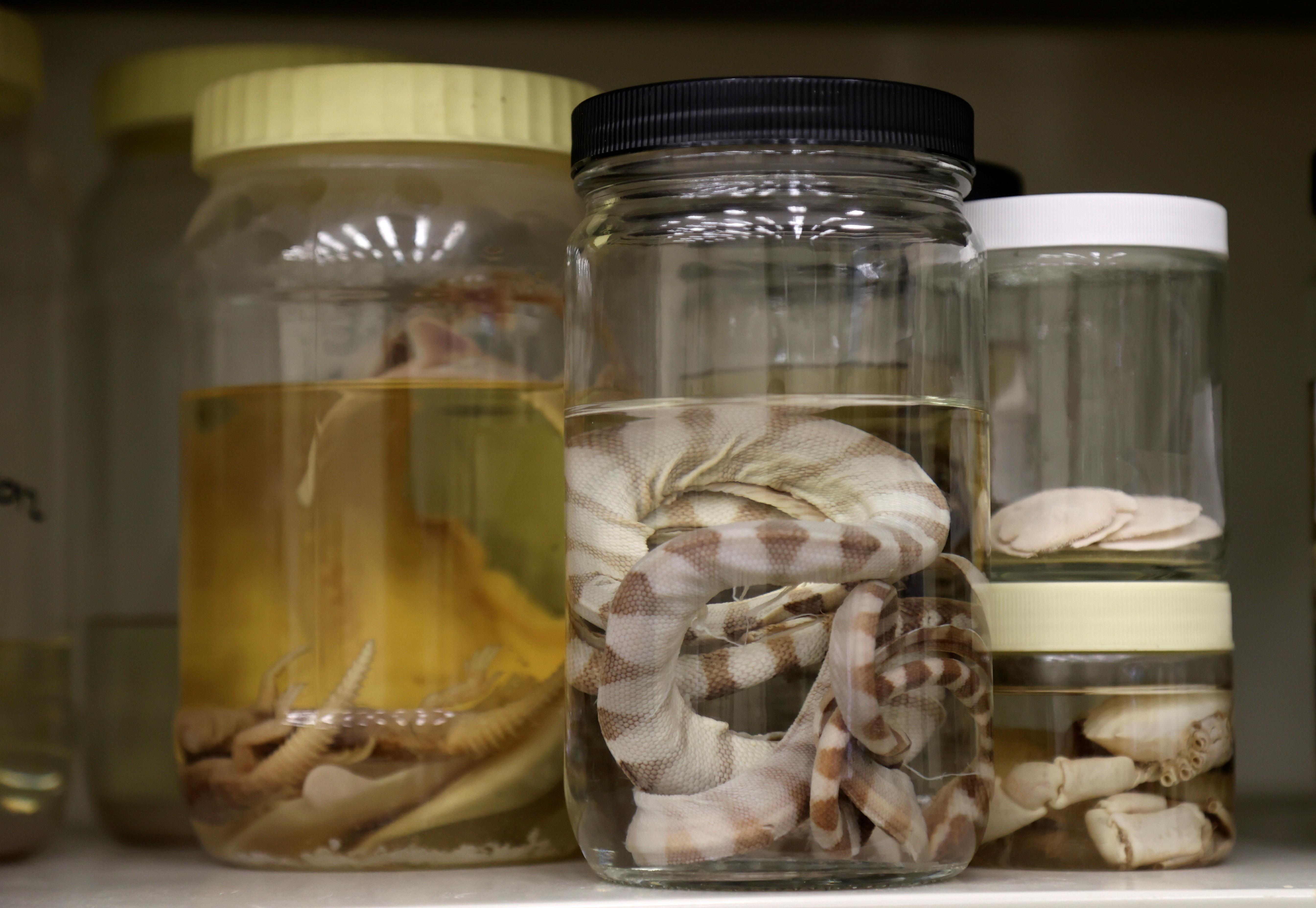 Samples of marine species are displayed at Qatar University Marine Biology Laboratory in Doha, Qatar February 14, 2021. Picture taken February 14, 2021. REUTERS/Ibraheem Al Omari