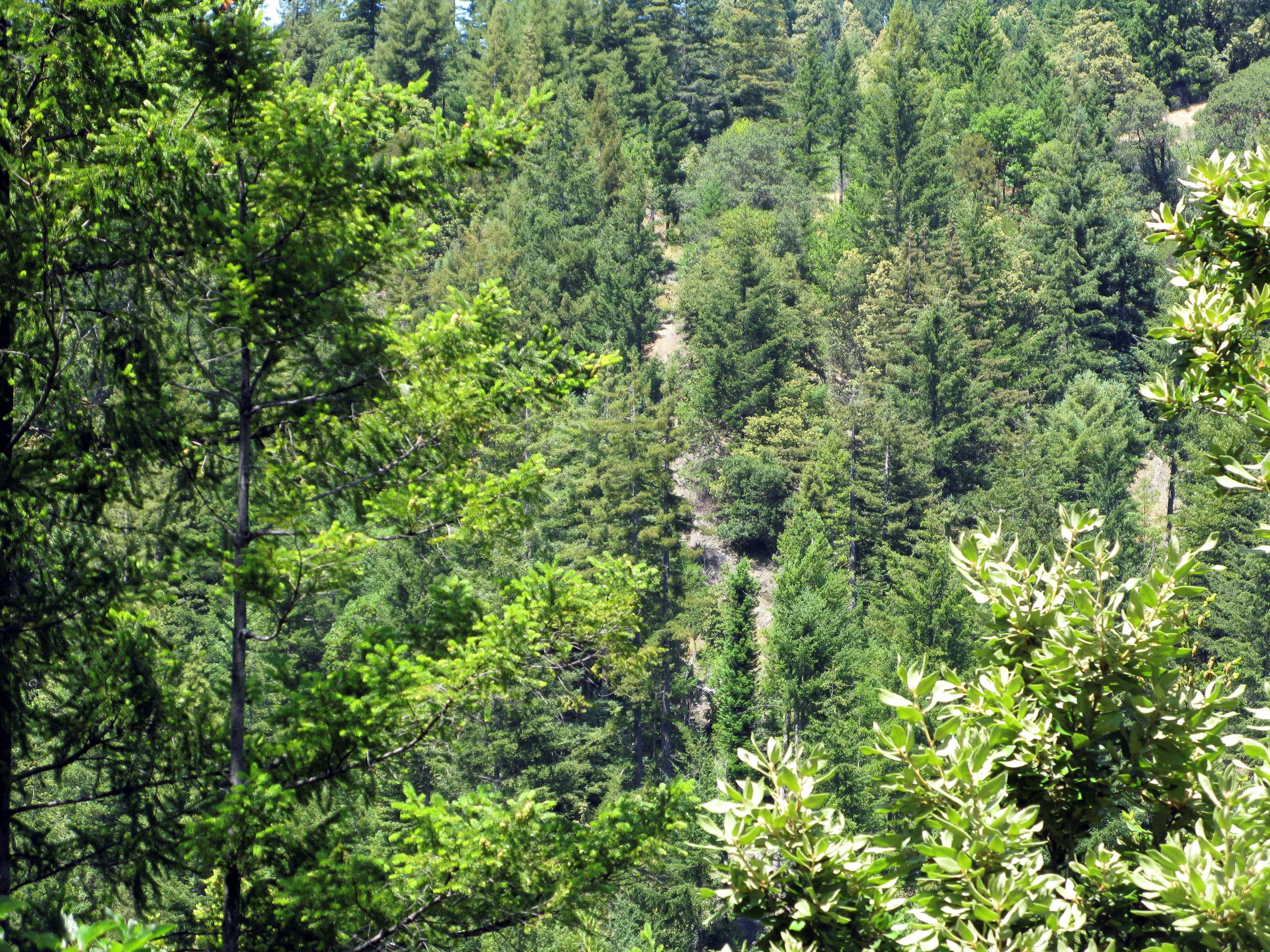 A view of the Garcia River Forest near Longvale, California July 27, 2009. The trees which trap quantities of the carbon dioxide that is warming the planet are sold as living carbon traps or