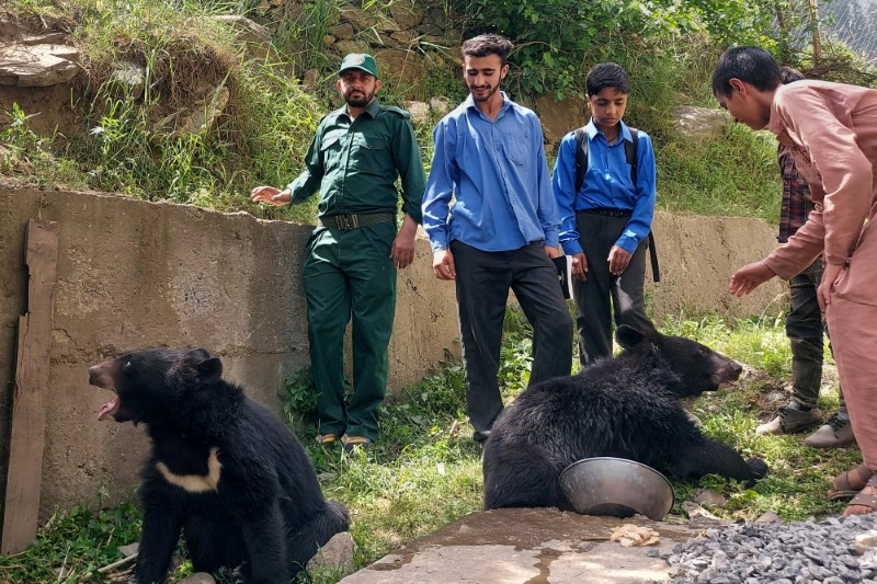 Students and residents play with a pair of Asian black bears, rescued a year ago near the Line of Control (LoC), at the Wildlife and Fisheries department in a Dawarian village in Neelum Valley, Pakistan-administrated Kashmir, June 12, 2021. REUTERS/Abu Arqam Naqash