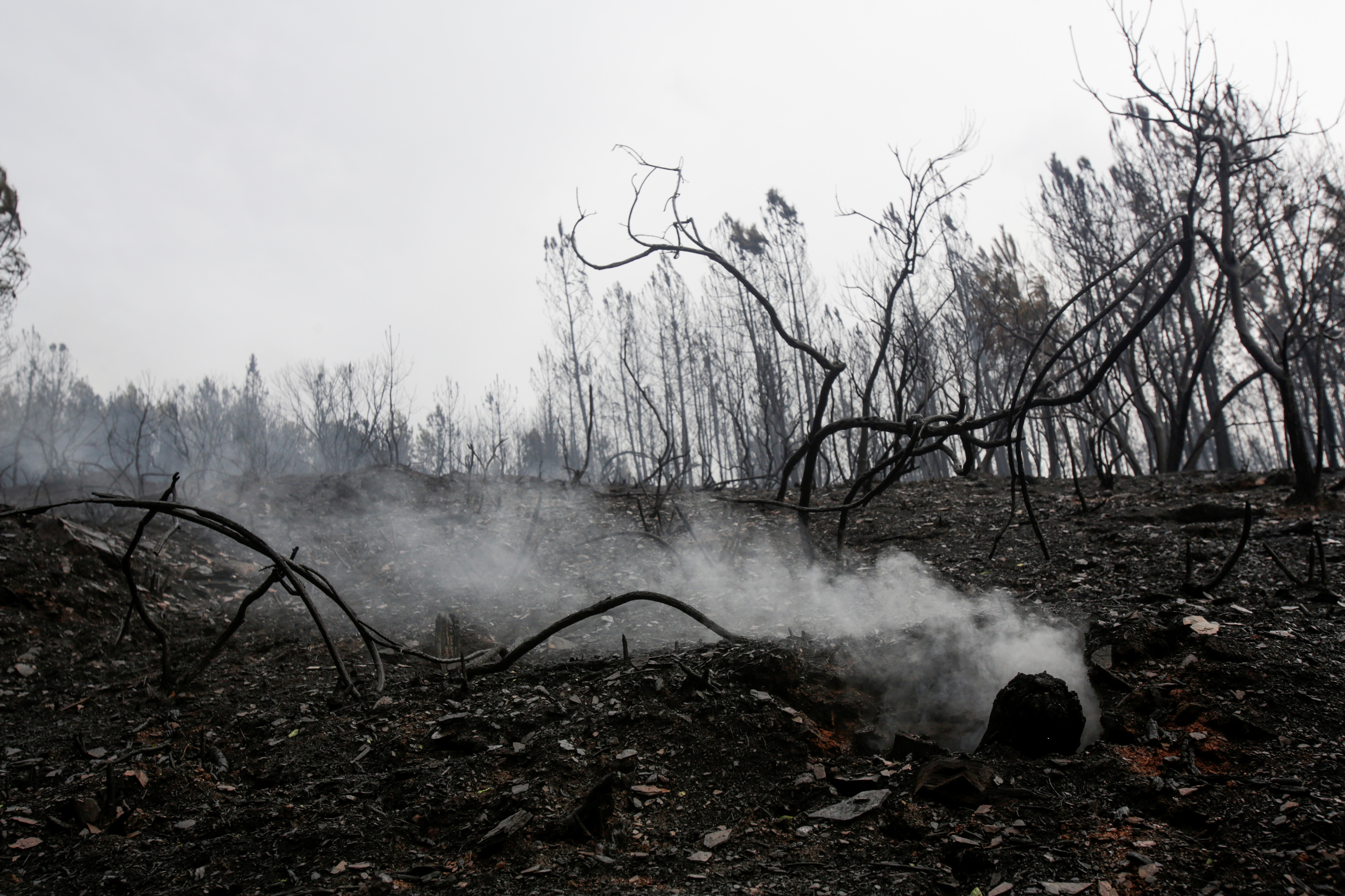 Smoke rises from a burnt tree after a wildfire near Ribas de Sil, northwestern Spain, September 7, 2021. REUTERS/Miguel Vidal
