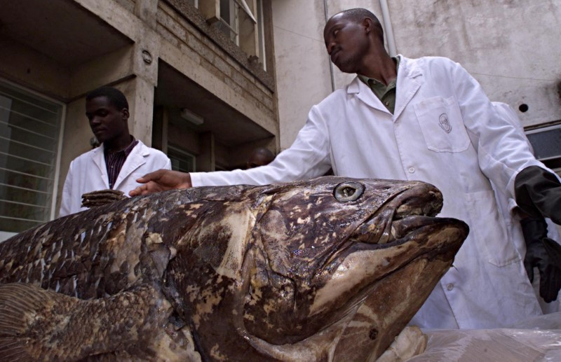 Staff of department of fish studies at the National Museum of Kenya on Nov. 19, 2001, display a coelacanth fish caught by Kenyan fishermen at the coastal town of Malindi in April 2001. REUTERS/George Mulala/File Photo