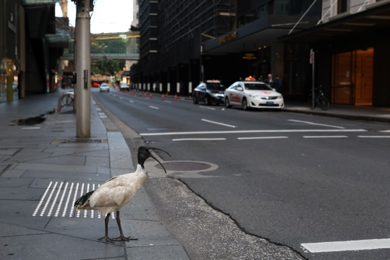 A bird stands at a crosswalk devoid of people in the city centre during a lockdown to curb the spread of a coronavirus disease (COVID-19) outbreak in Sydney, Australia, August 9, 2021.  REUTERS/Loren Elliott