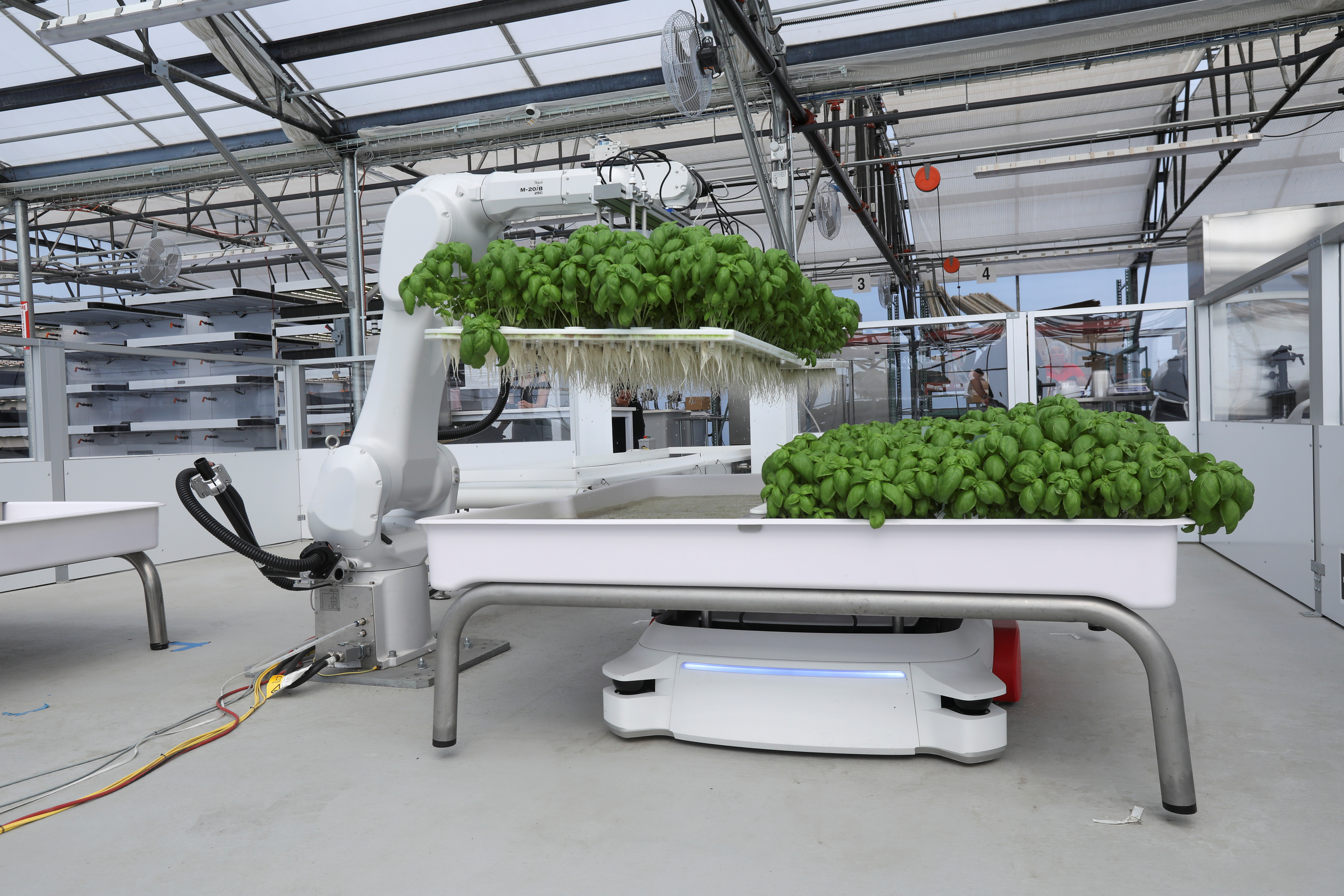 A robotic arm system named Ada lifts Genovese Basil plants for its roots to be inspected at the Iron Ox greenhouse in Gilroy, California, U.S. on September 15, 2021. Picture taken September 15, 2021. REUTERS/Nathan Frandino