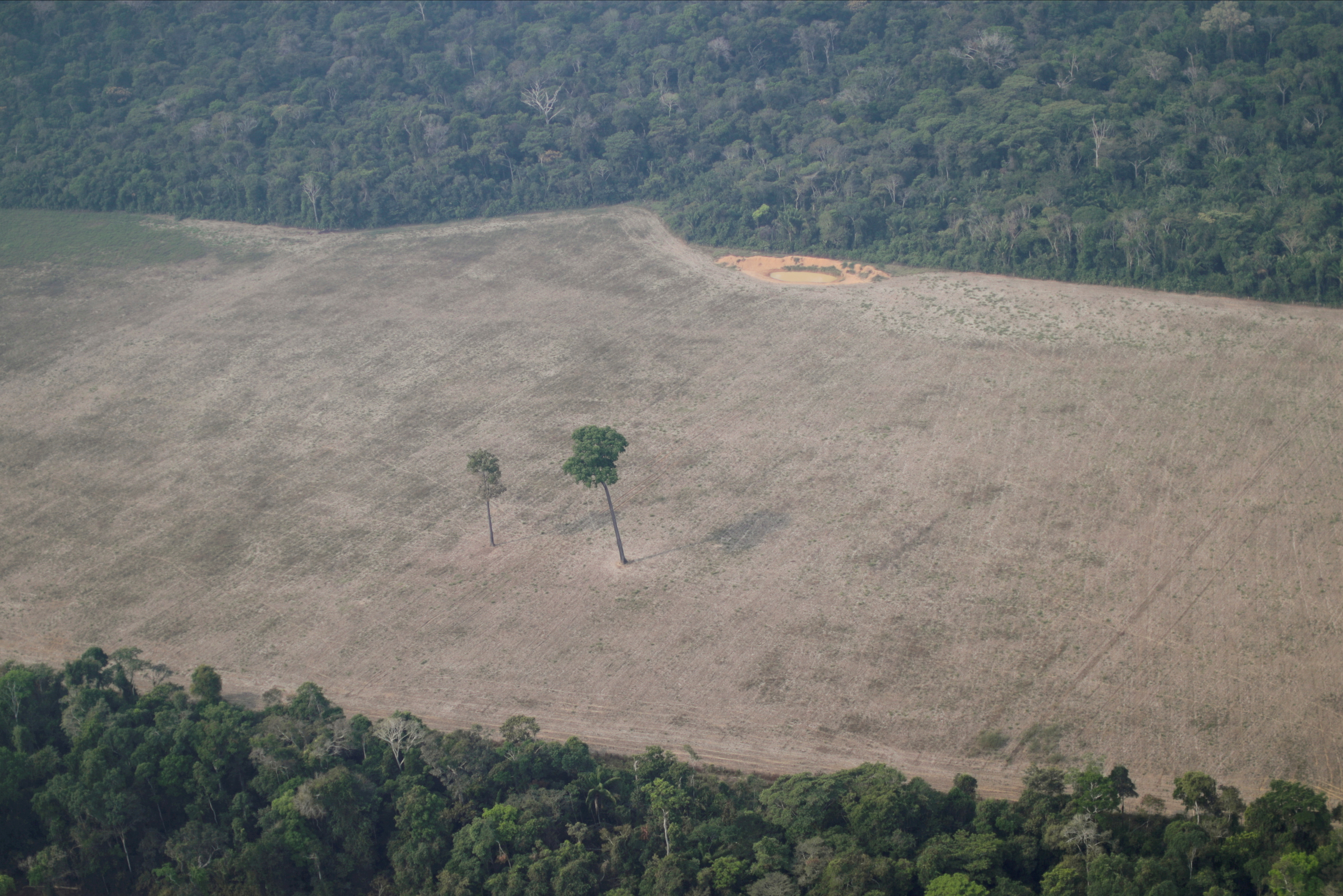 An aerial view shows a tree at the center of a deforested plot of the Amazon near Porto Velho, Rondonia State, Brazil August 14, 2020. REUTERS/Ueslei Marcelino