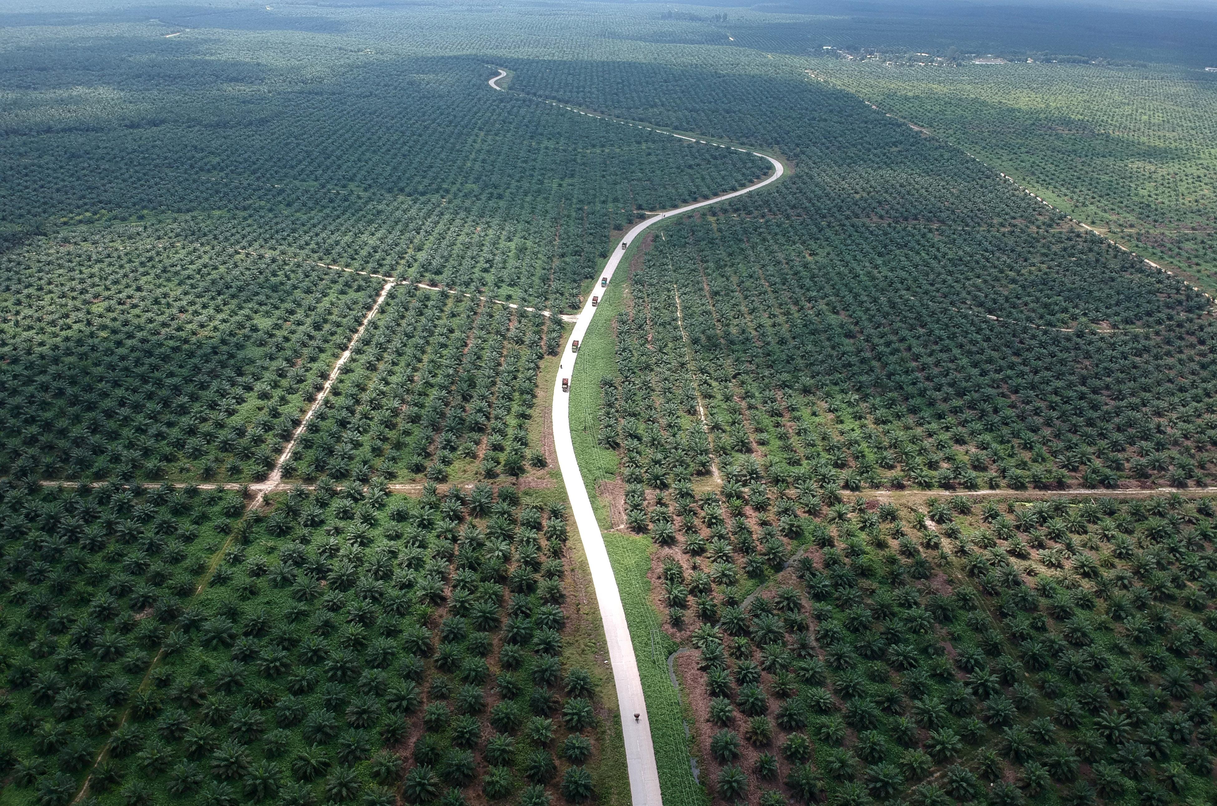 An aerial photo of a palm oil plantation in Batanghari, Jambi province, Sumatra island, Indonesia November 28, 2018. Antara Foto/Wahdi Septiawan/via REUTERS